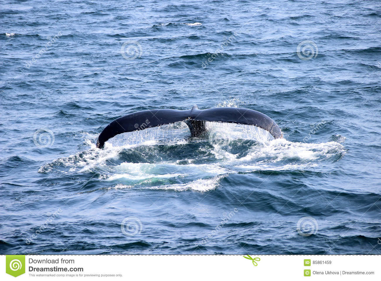 Seascape With Whale Tail Royalty-Free Stock Image ...