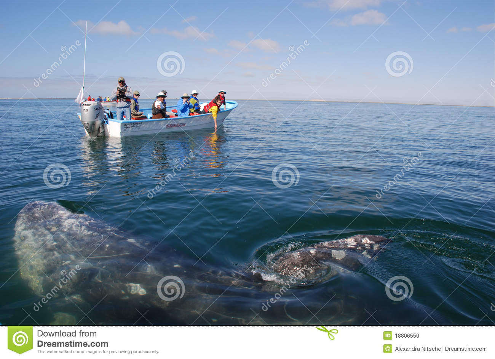 Whale watching San Ignacio Lagoon Baja California