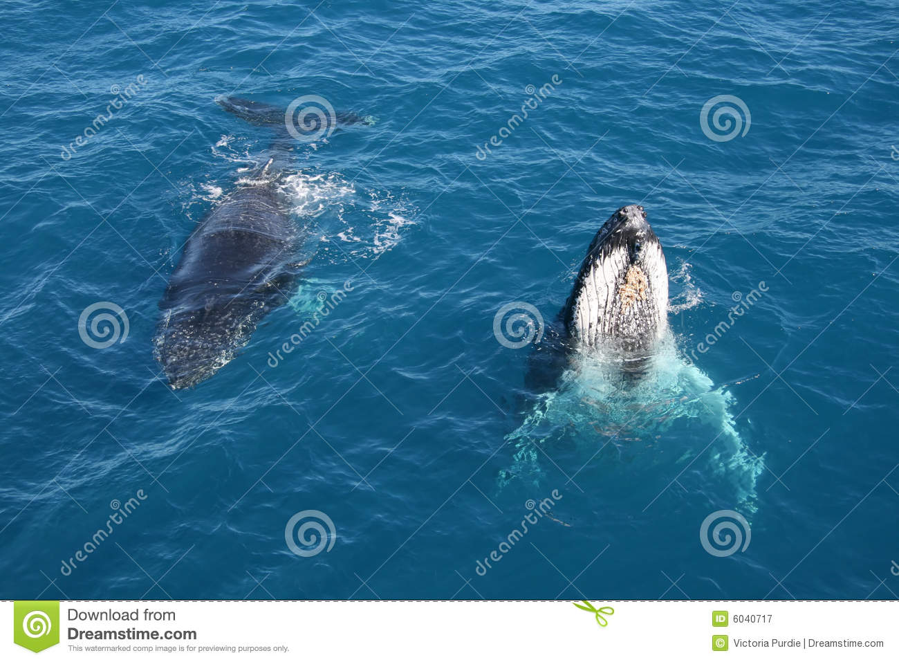 Whales Greeting