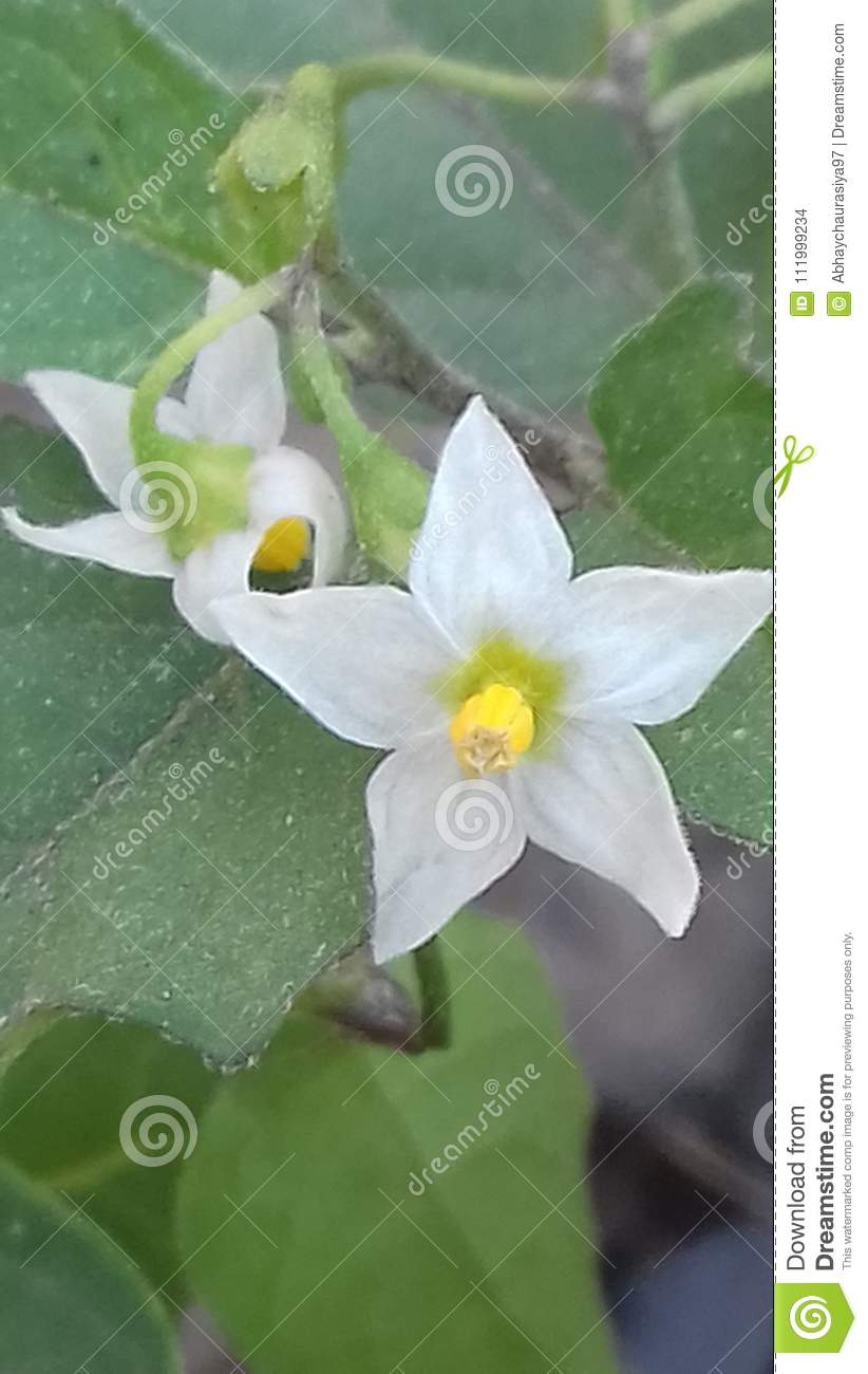 Natural Flowers And Scenery Stock Photo Image Of Splendid Natural