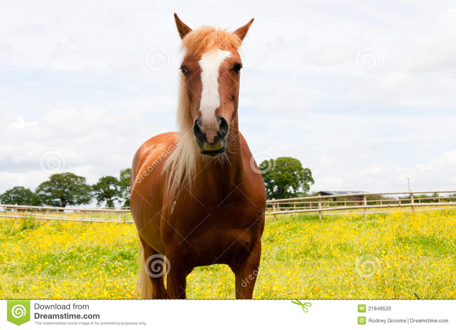 All pretty horses settings