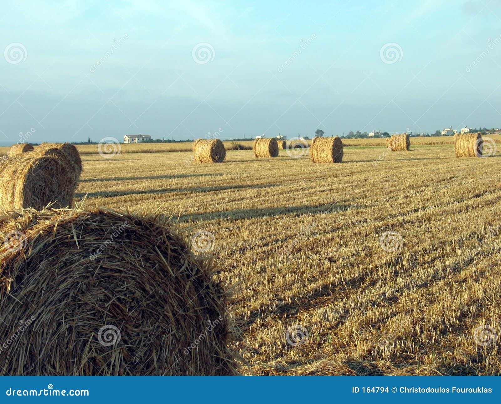 Wheat balls