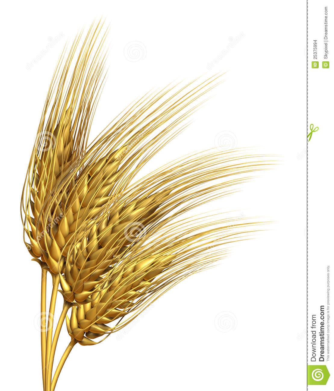 Wheat or barley Element