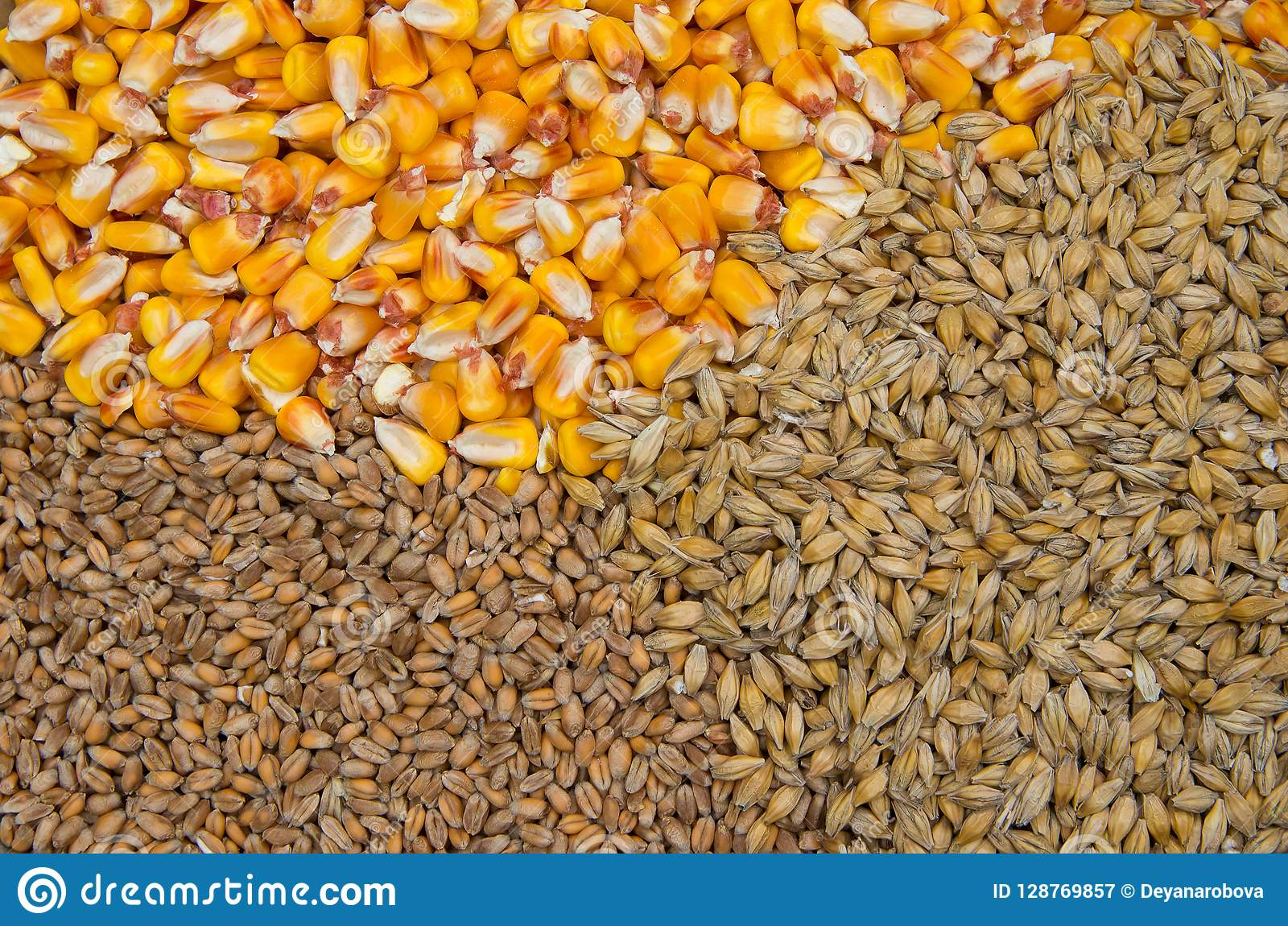 Wheat, barley and maize