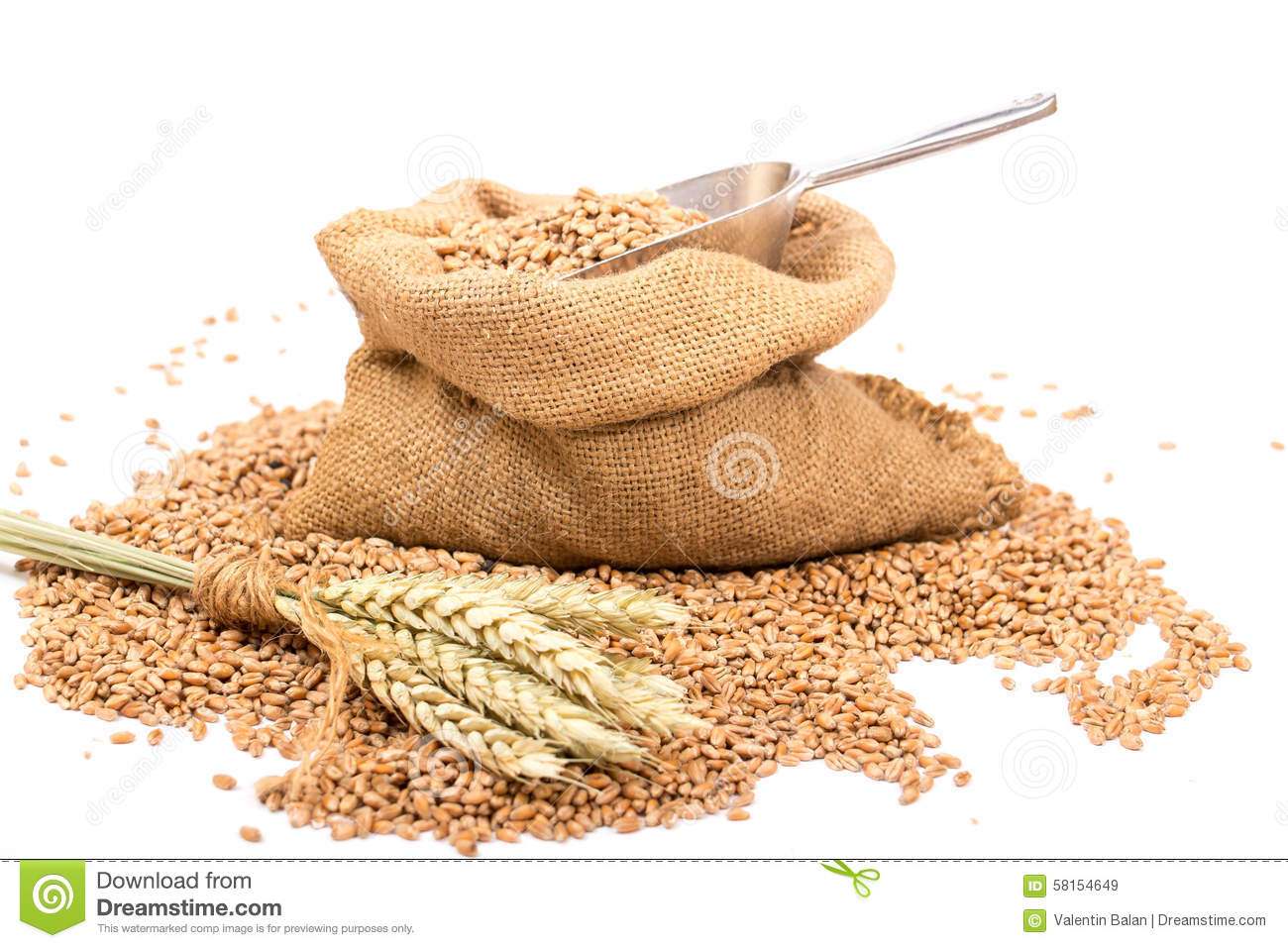 Wheat in a burlap sack stock image. Image of ingredients ...