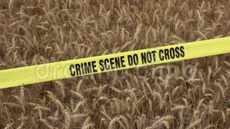 Wheat and Crime Scene Do Not Cross  Farm, agriculture