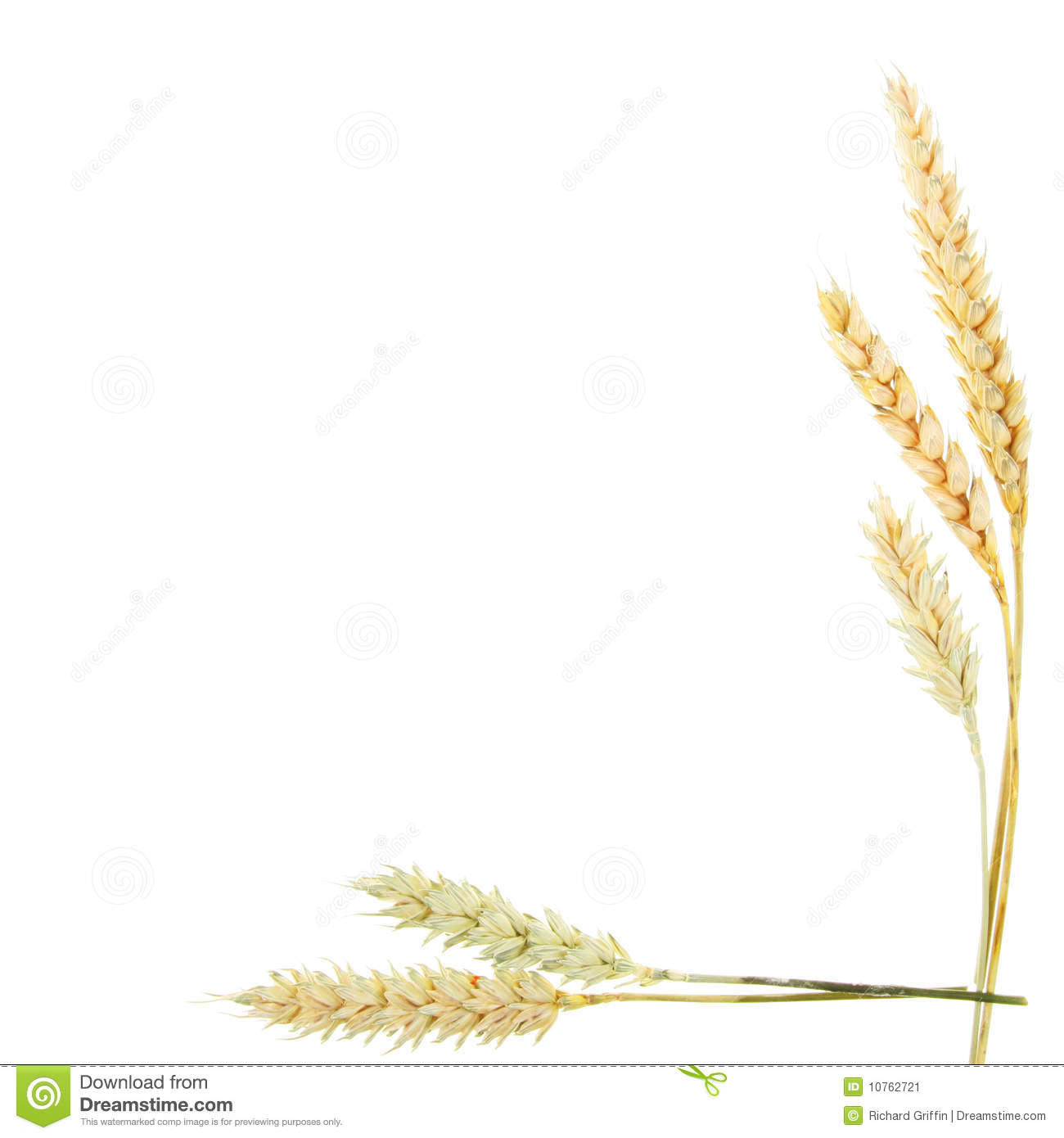 Free Clipart Images Wheat | Free | Download