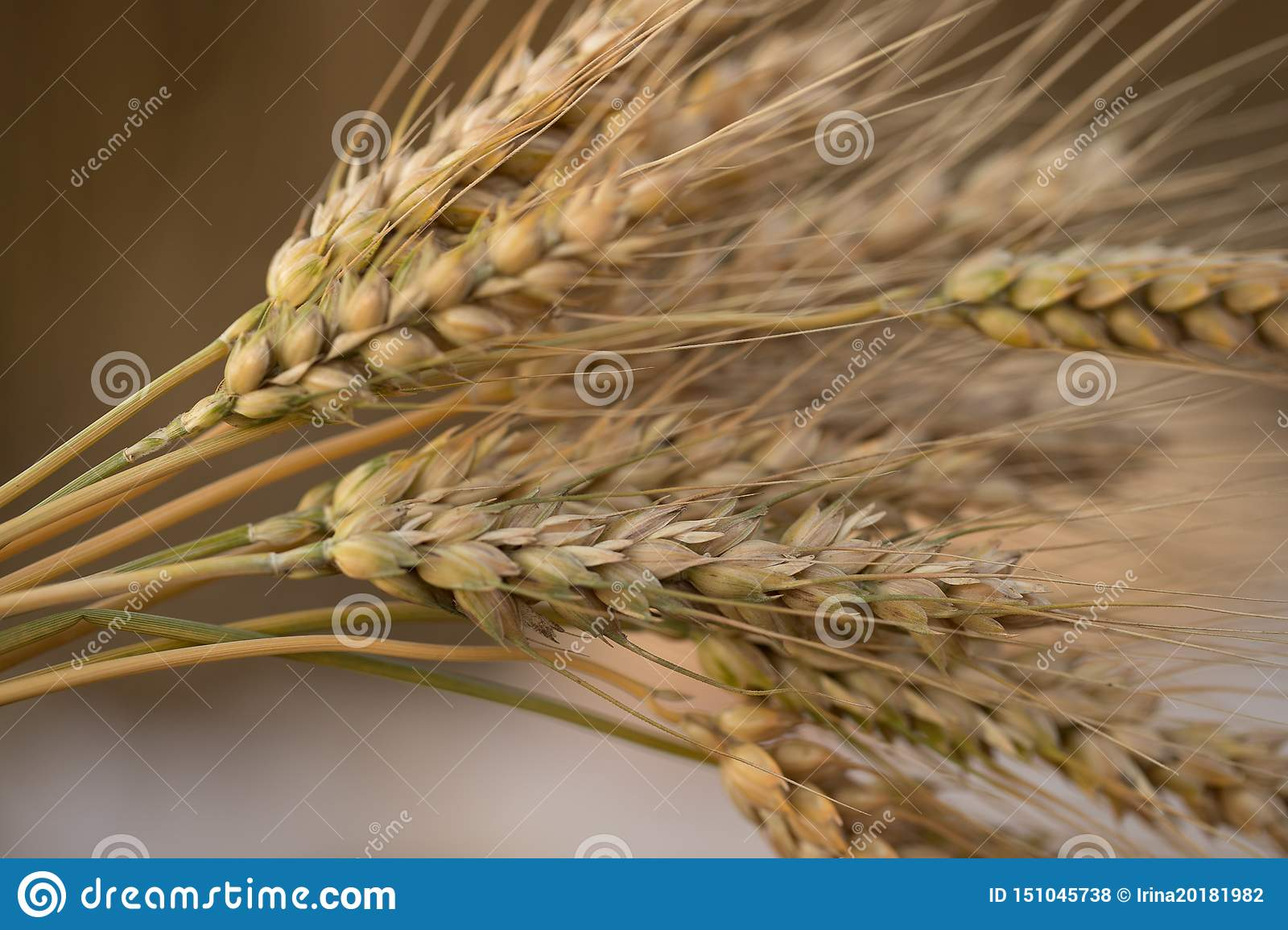 Wheat Ears In The Sun Stock Photo Image Of Golden Harvest