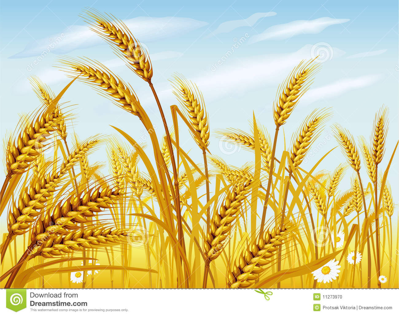 Wheat In The Field Stock Photo - Image: 11273970