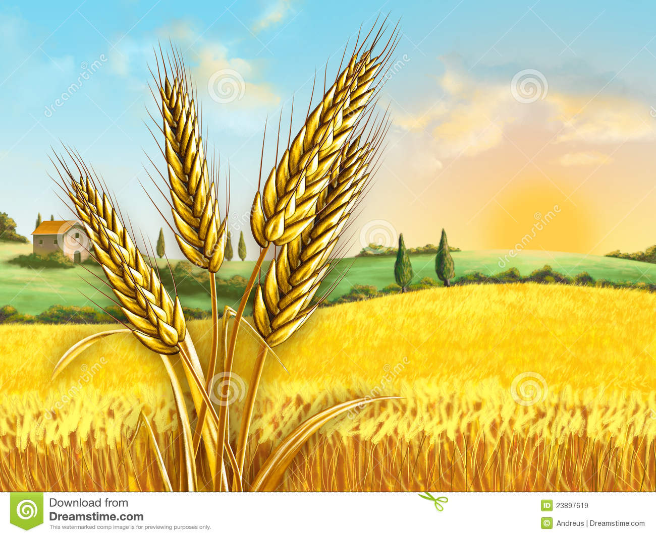 Wheat Field Royalty Free Stock Images - Image: 23897619