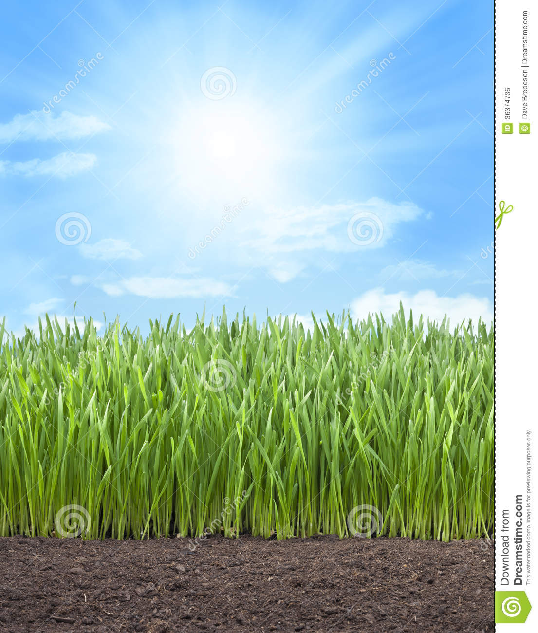 Wheat Field Grass Sun Sky Royalty Free Stock Image - Image ...