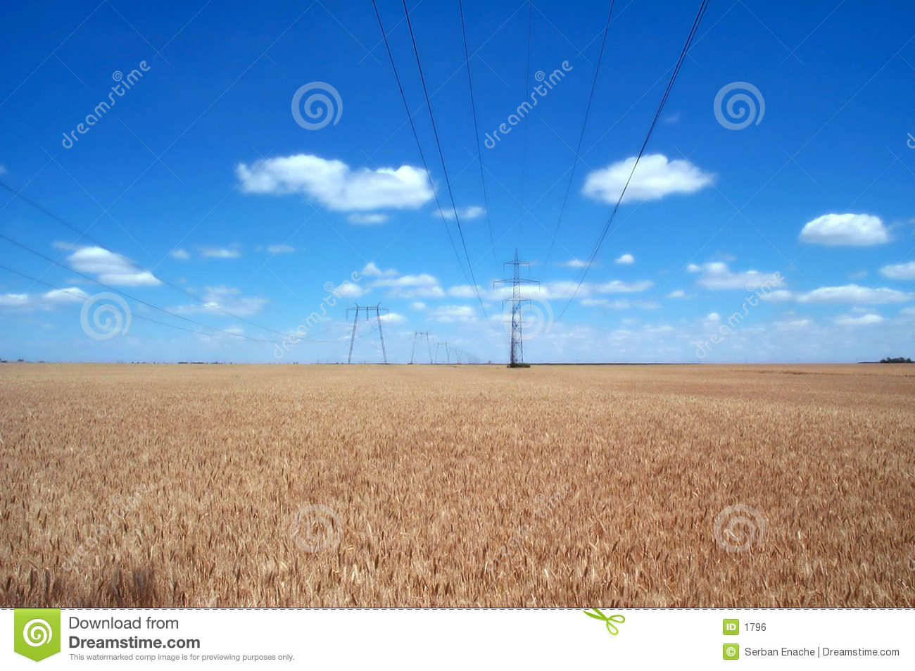 Wheat fields and power lines