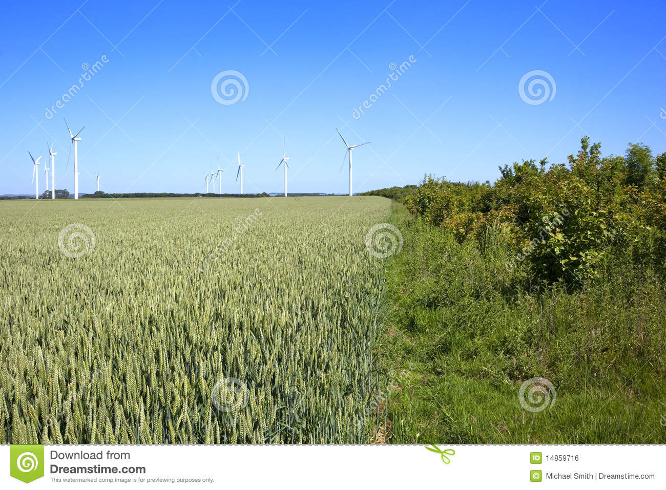 Wheat fields with wind turbines