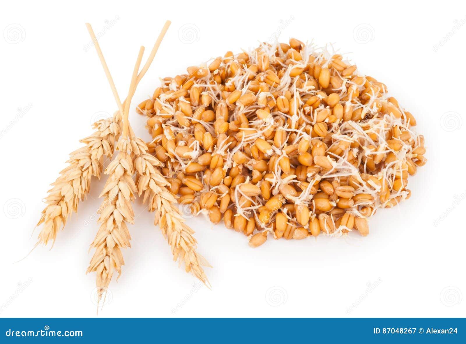 Wheat germ with ears