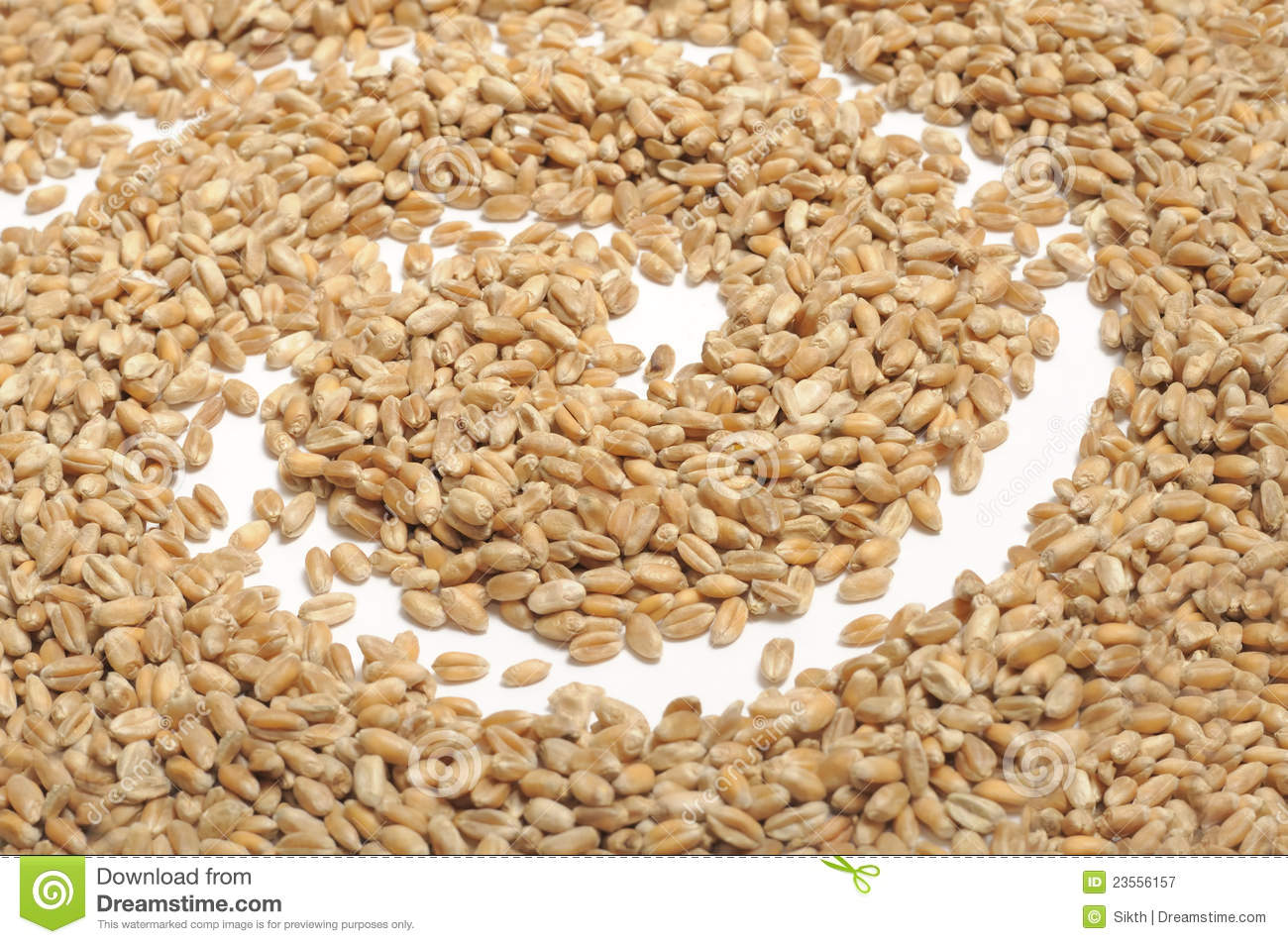 Wheat Grains with Spiral