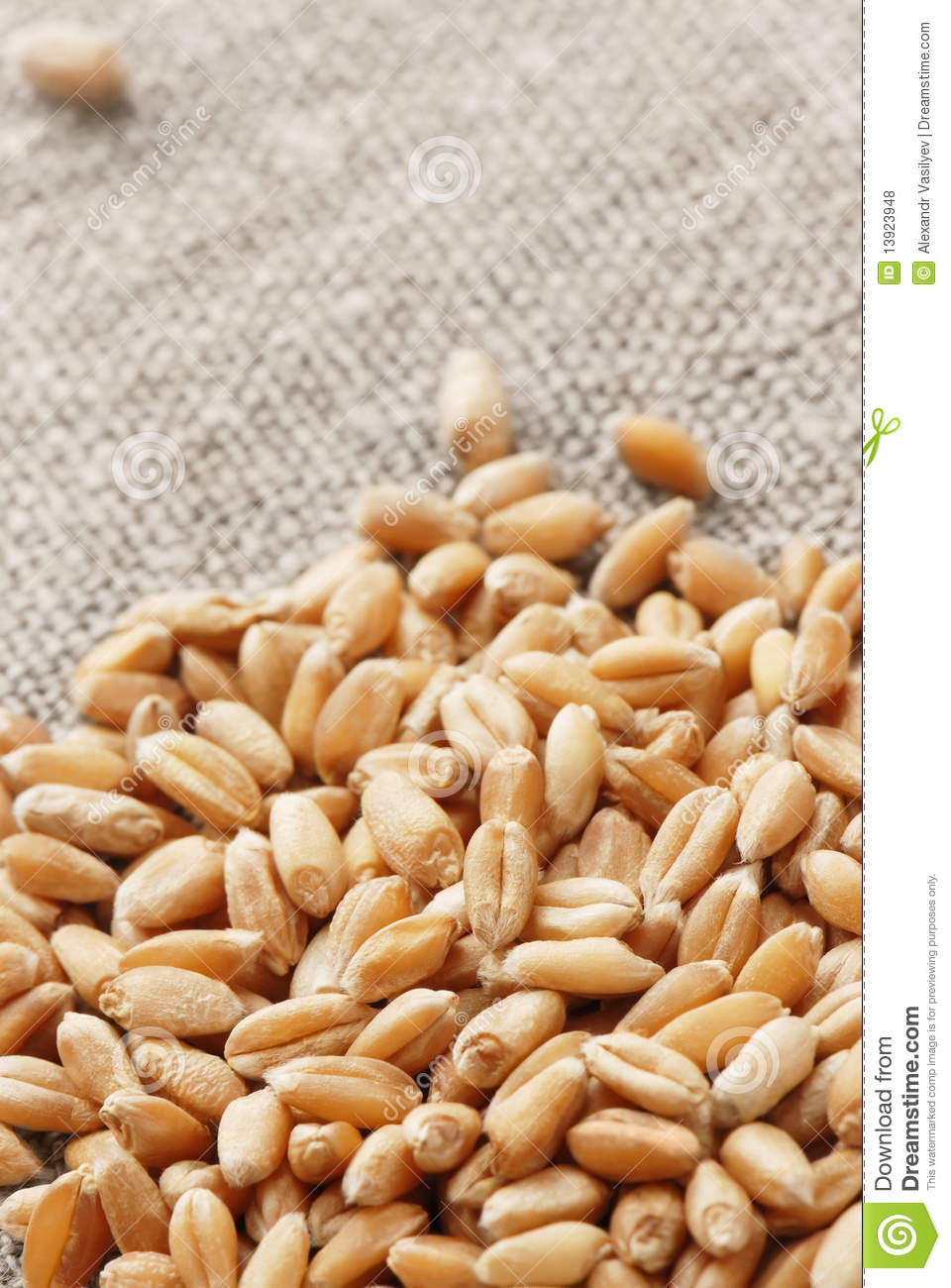 Wheat on a hessian
