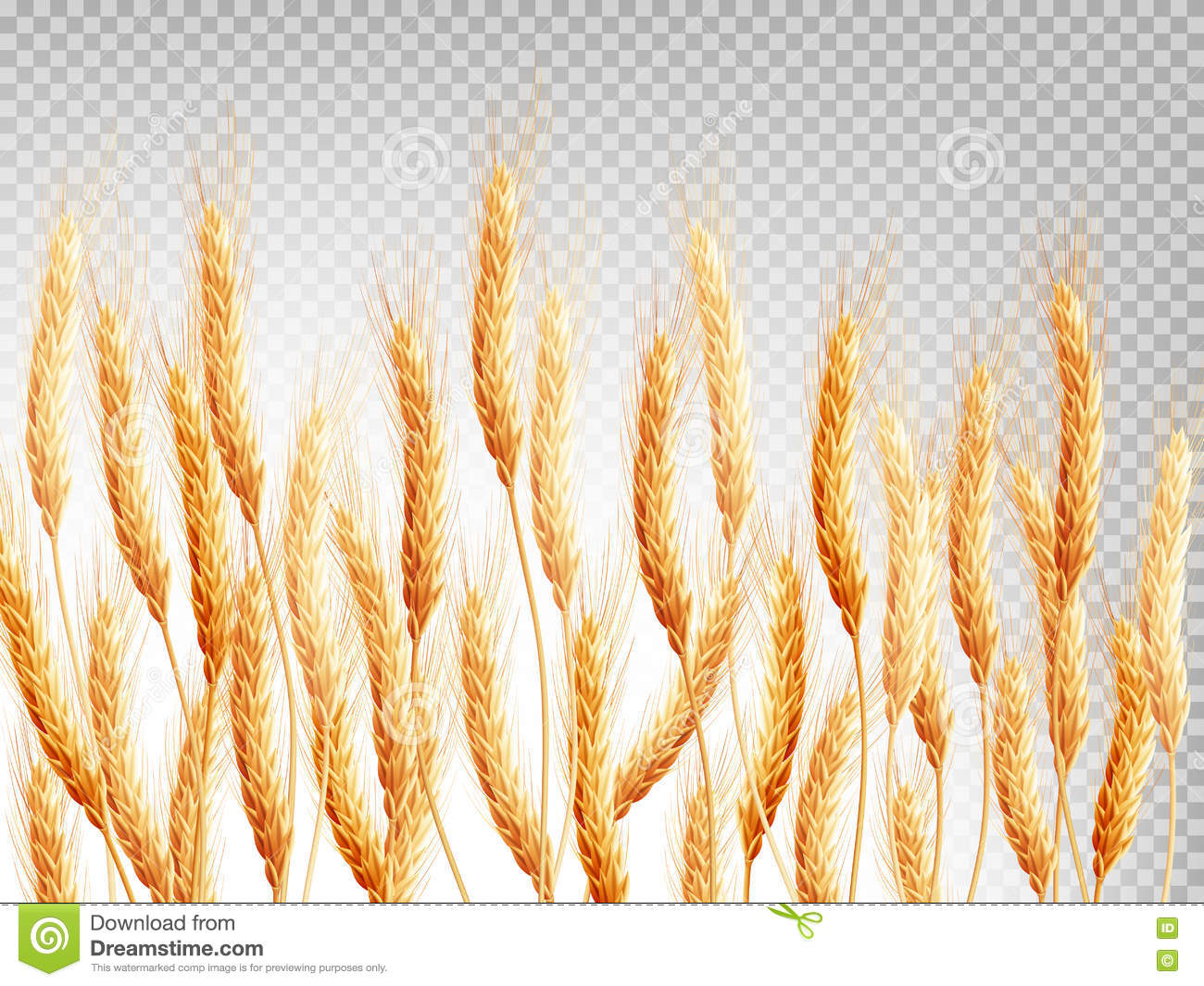 Wheat Isolated On A Tr...