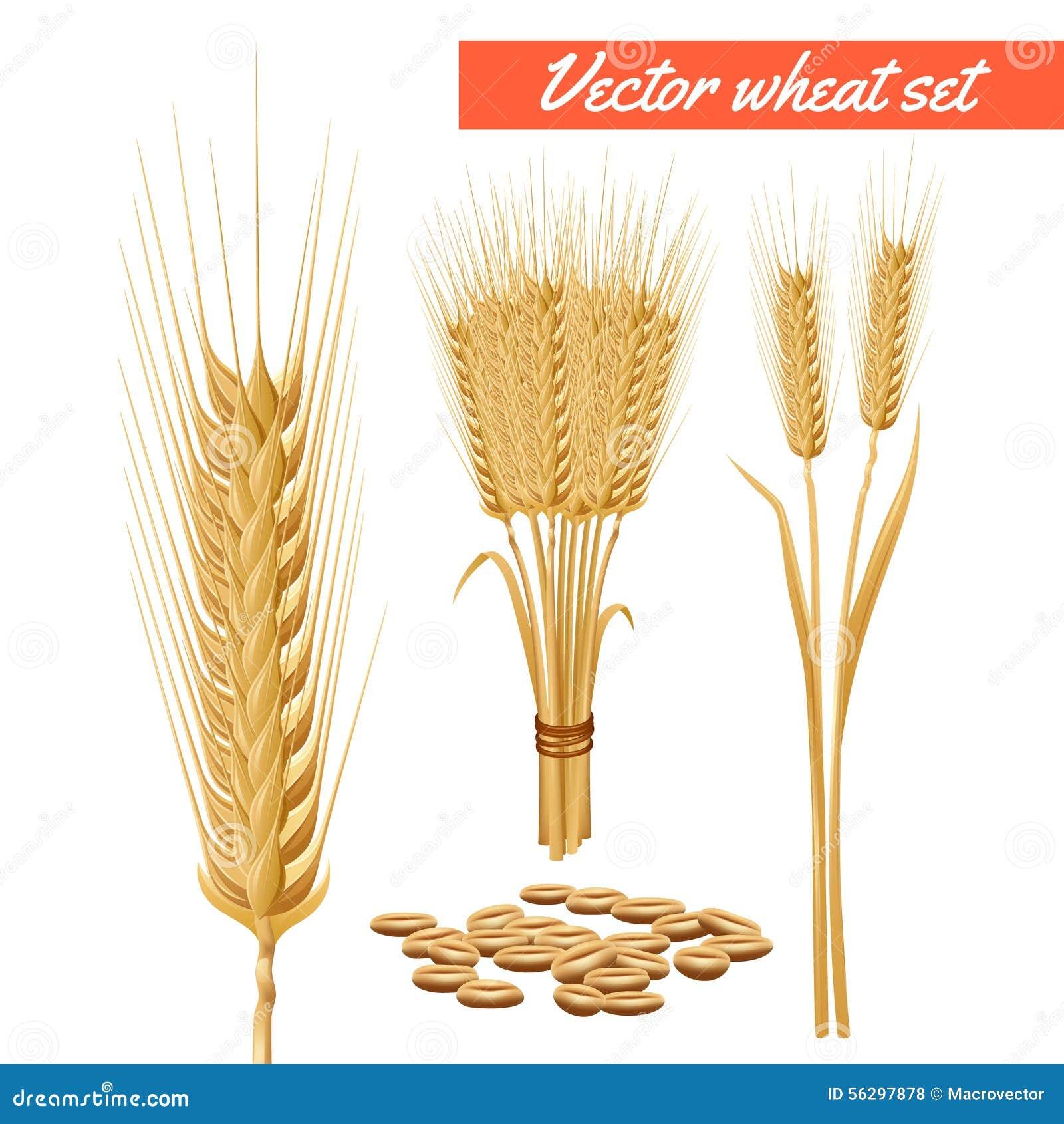 Wheat Grain Stock Illustrations – 19,217 Wheat Grain Stock ...