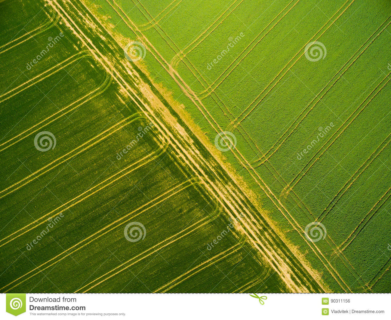 Wheat and rapeseed fields with tractor tracks.
