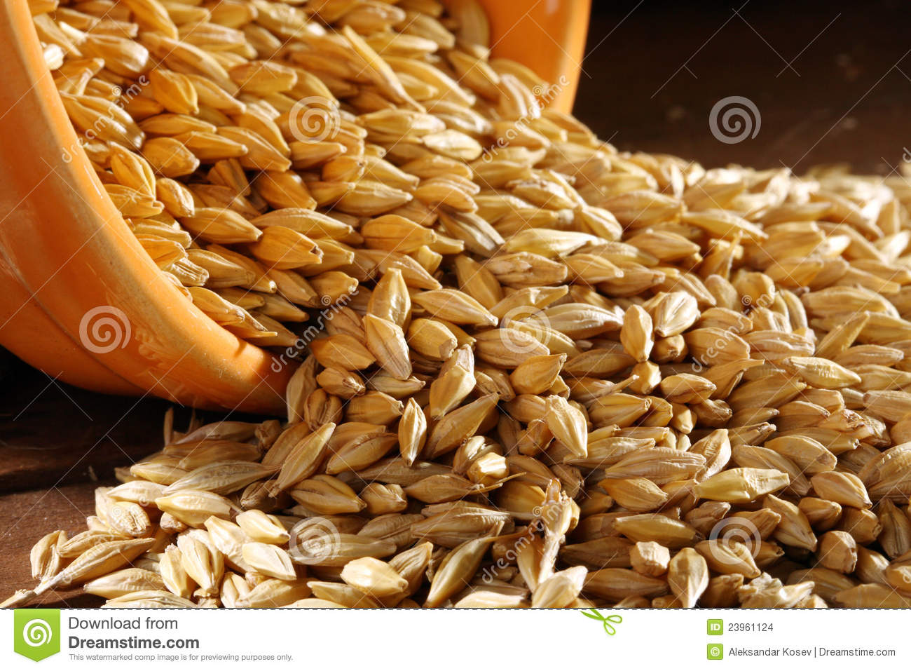 Wheat Seed Stock Images - Image: 23961124