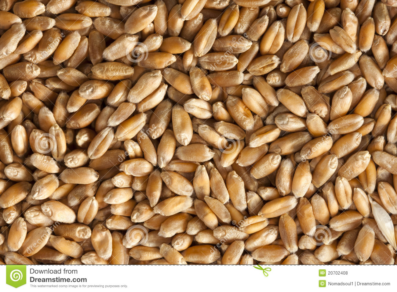 Wheat Seeds Royalty Free Stock Photos - Image: 20702408: www.dreamstime.com/royalty-free-stock-photos-wheat-seeds-image20702408