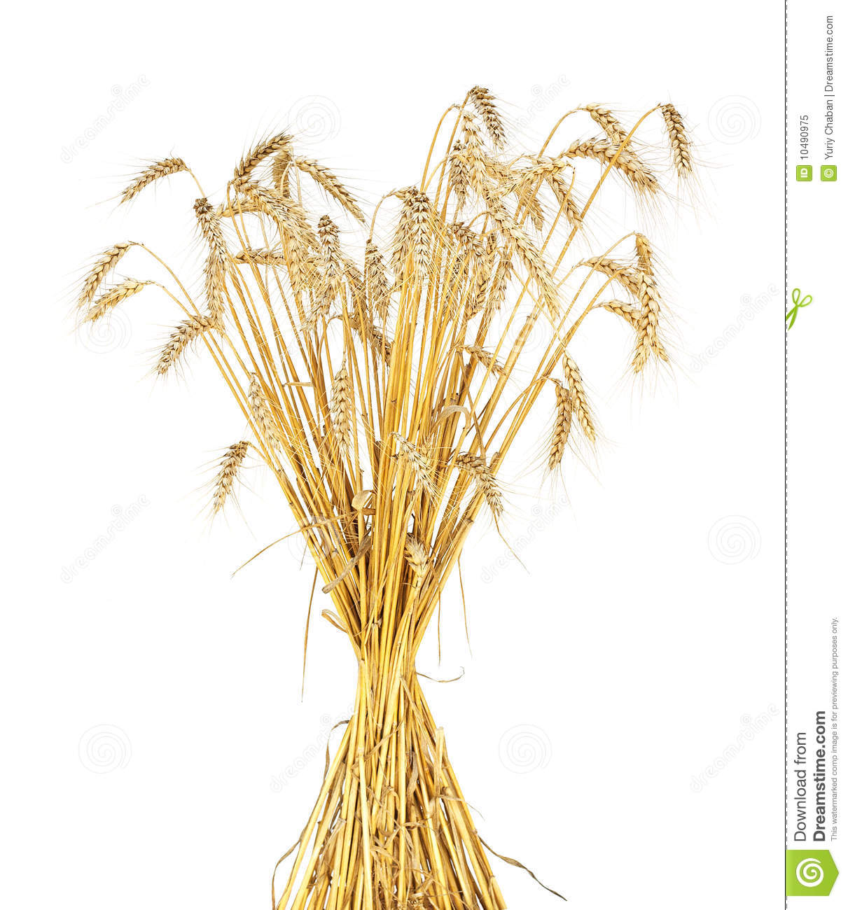 sheaf drawings pictures to pin on pinterest pinsdaddy Sheaf of Wheat Clip Art Sheath of Wheat Coins