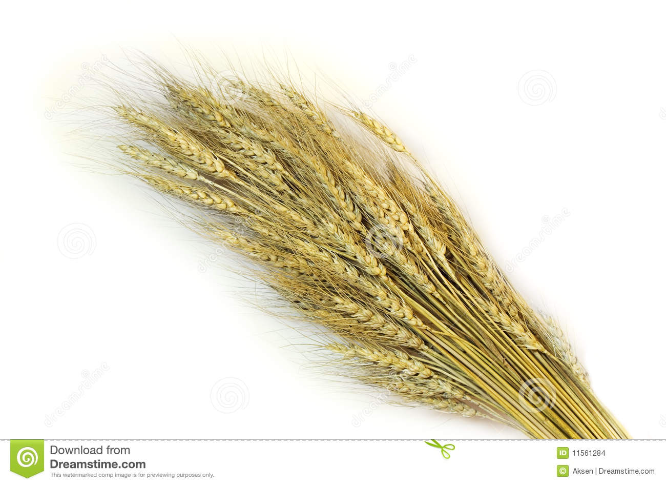 Sheaf from wheat ears on a white background.