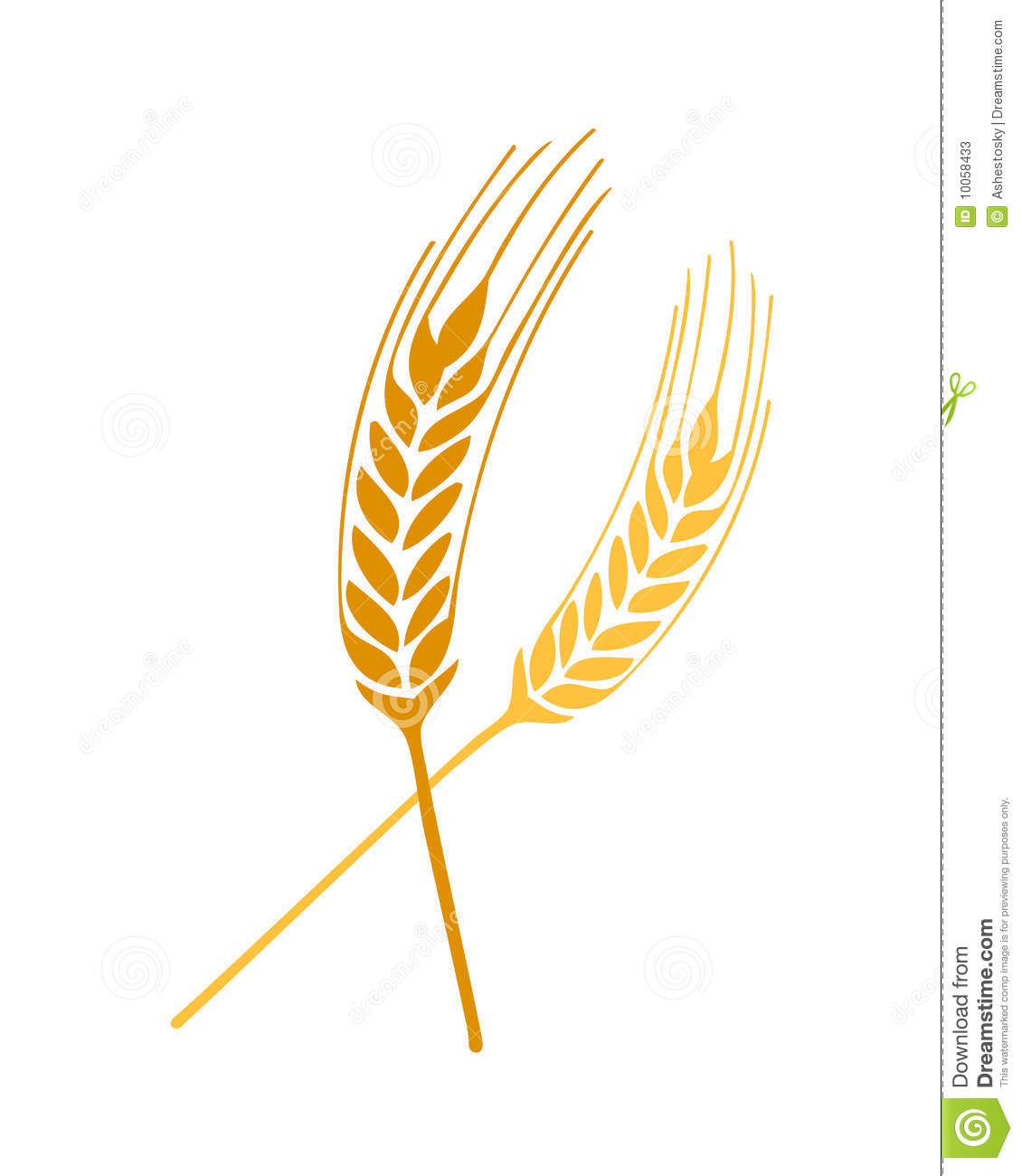 Wheat Springs Vector Stock Photos - Image: 10058433