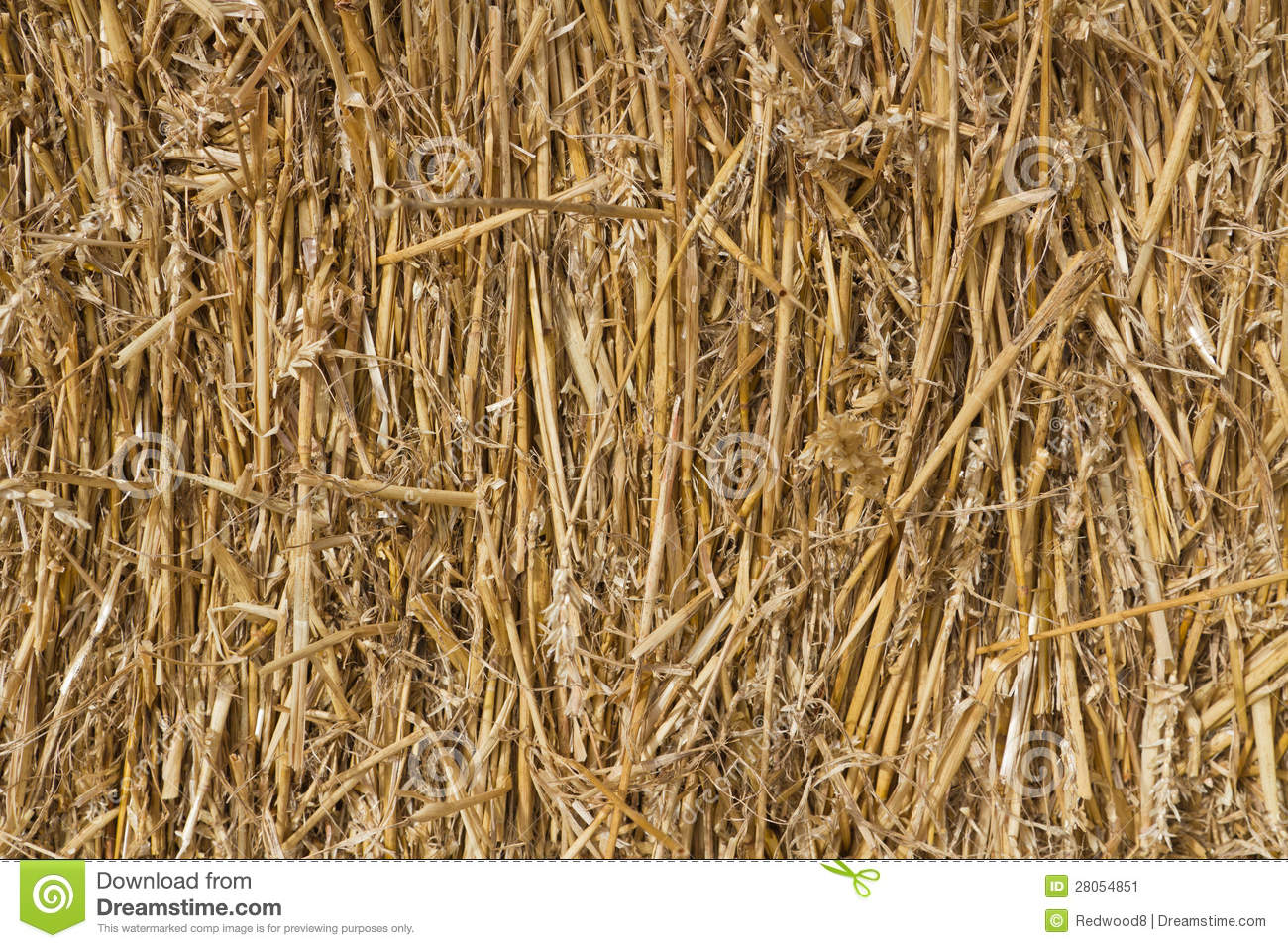 No Credit Check Credit Cards >> Wheat Straw Stock Image - Image: 28054851