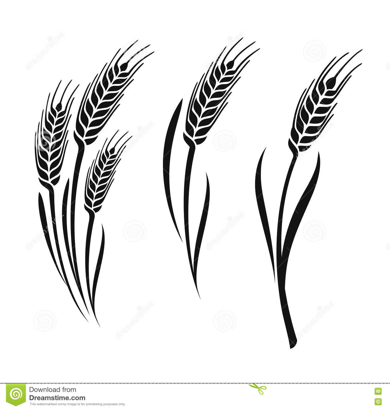Wheat vector ears stock vector. Illustration of natural ...