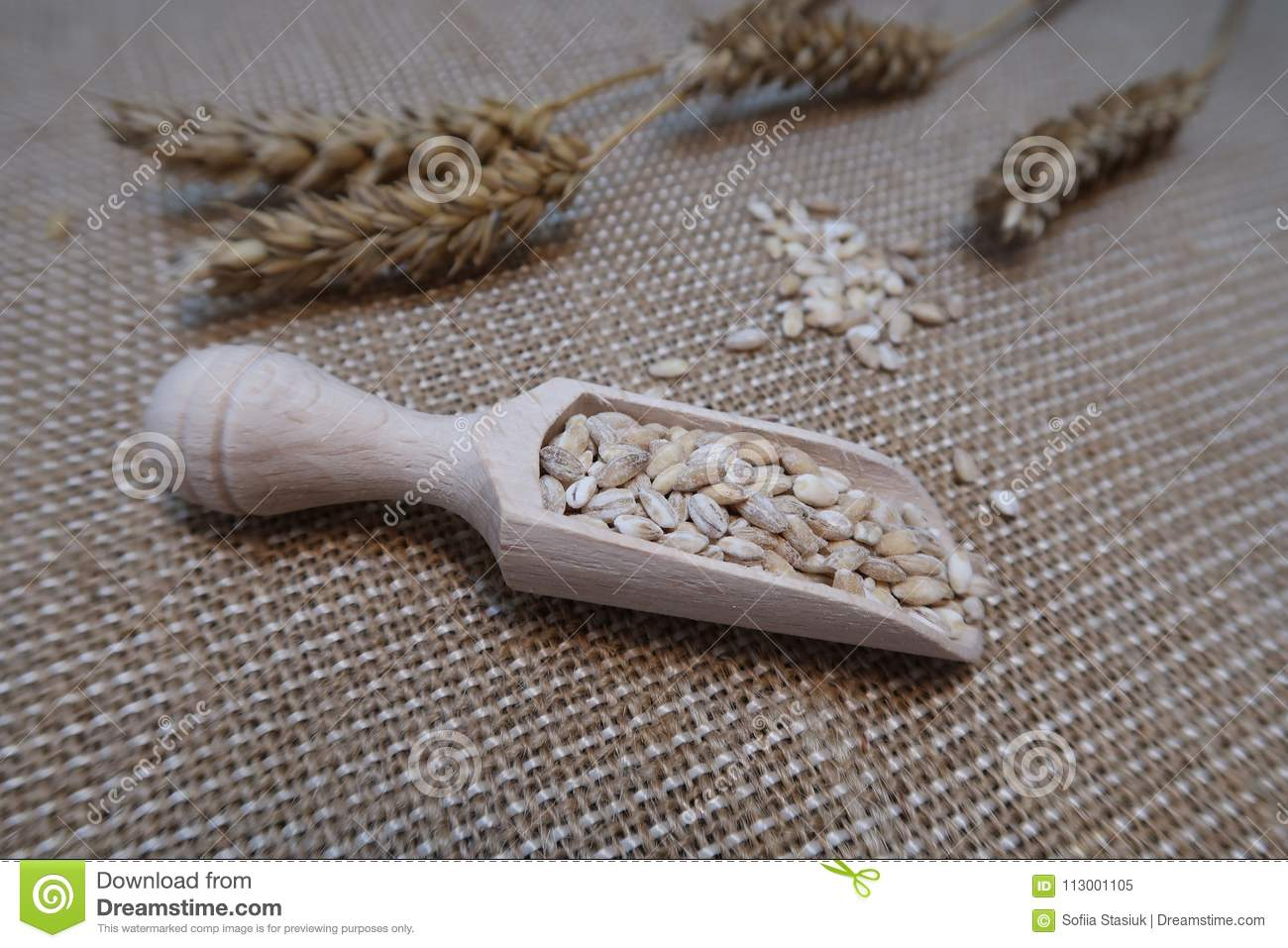 Wheat in a wooden scoop with wheat ears on a hessian background