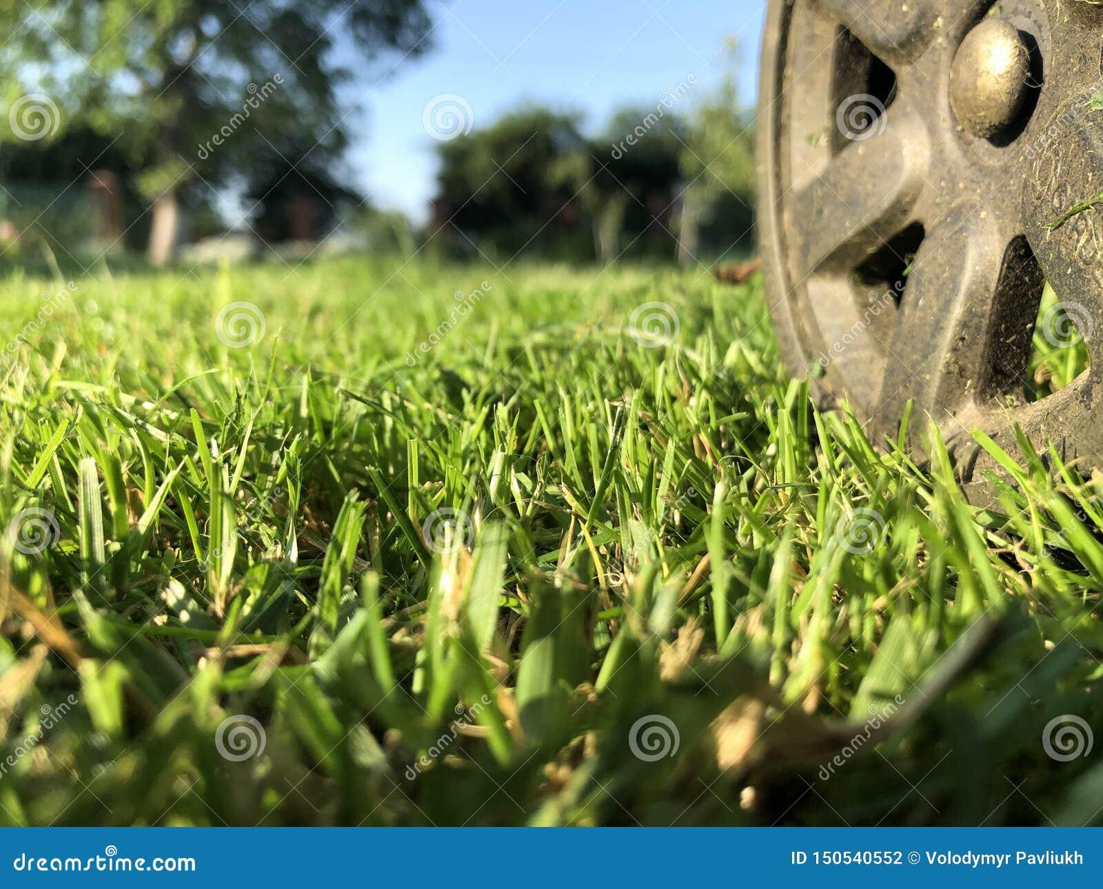 A wheel from a lawn mower on a truncheted farm lawn