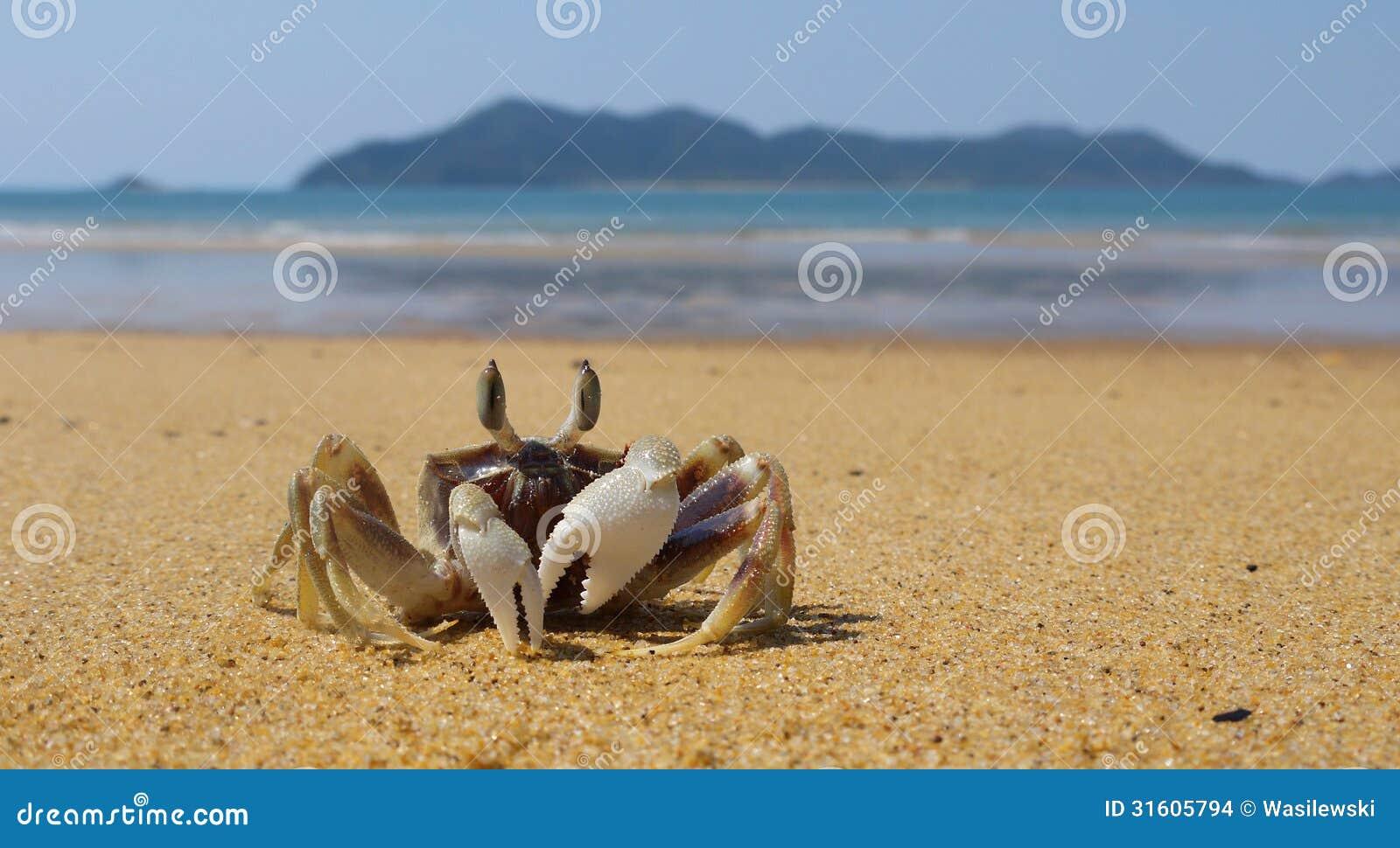 Dunk Island Animals: Fiddler Crab And Dunk Island Stock Photo