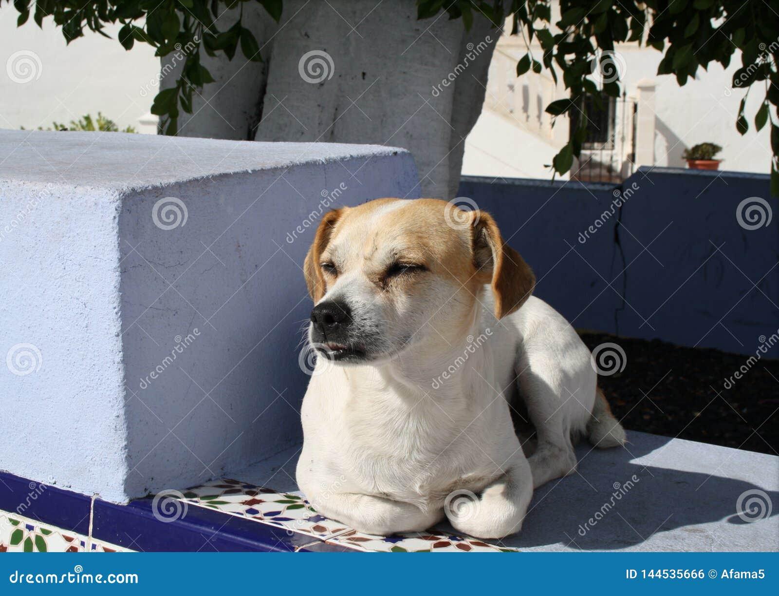 Whisky den fria bosatta hunden av Puerto Naos