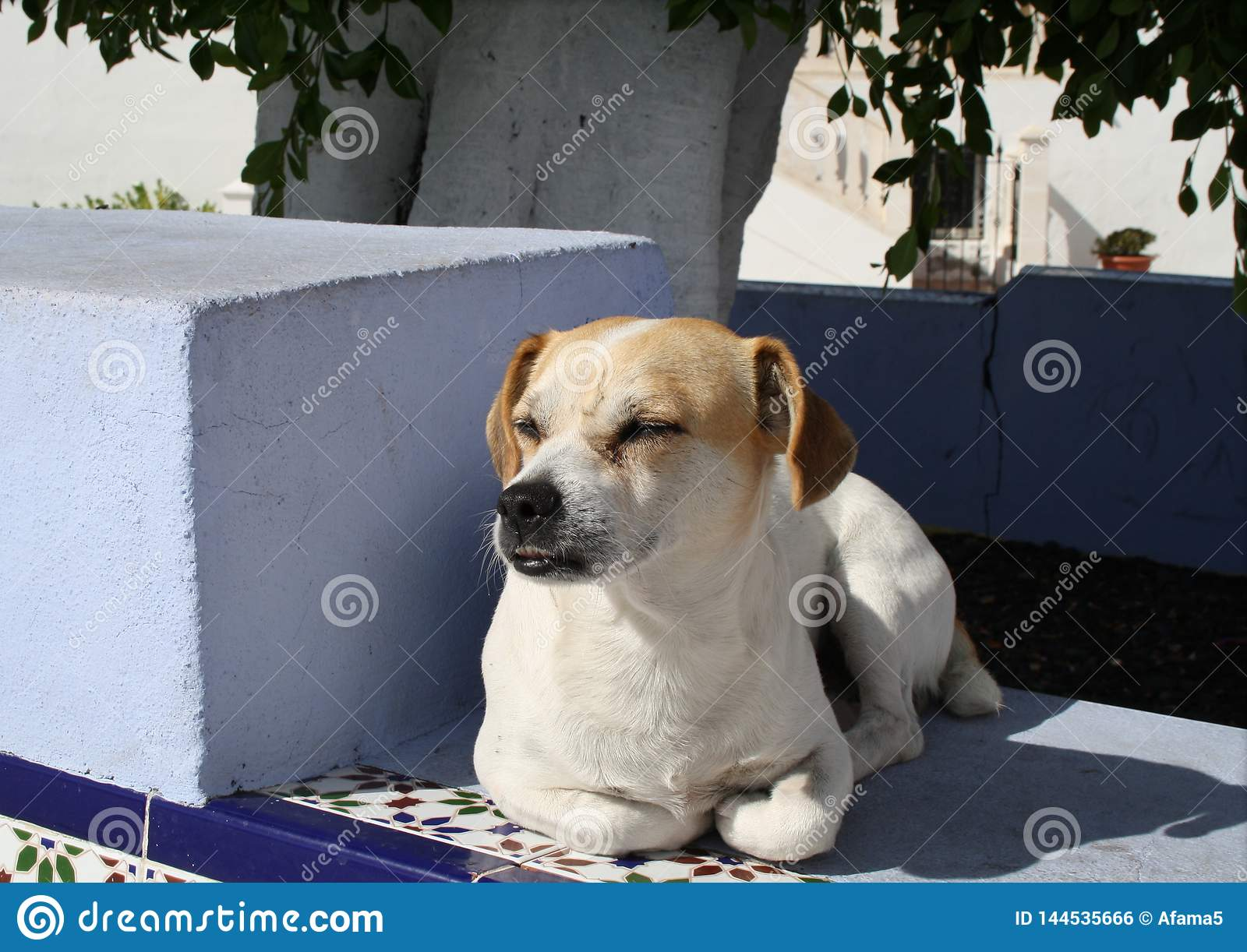 Whisky, the free living dog of Puerto Naos.