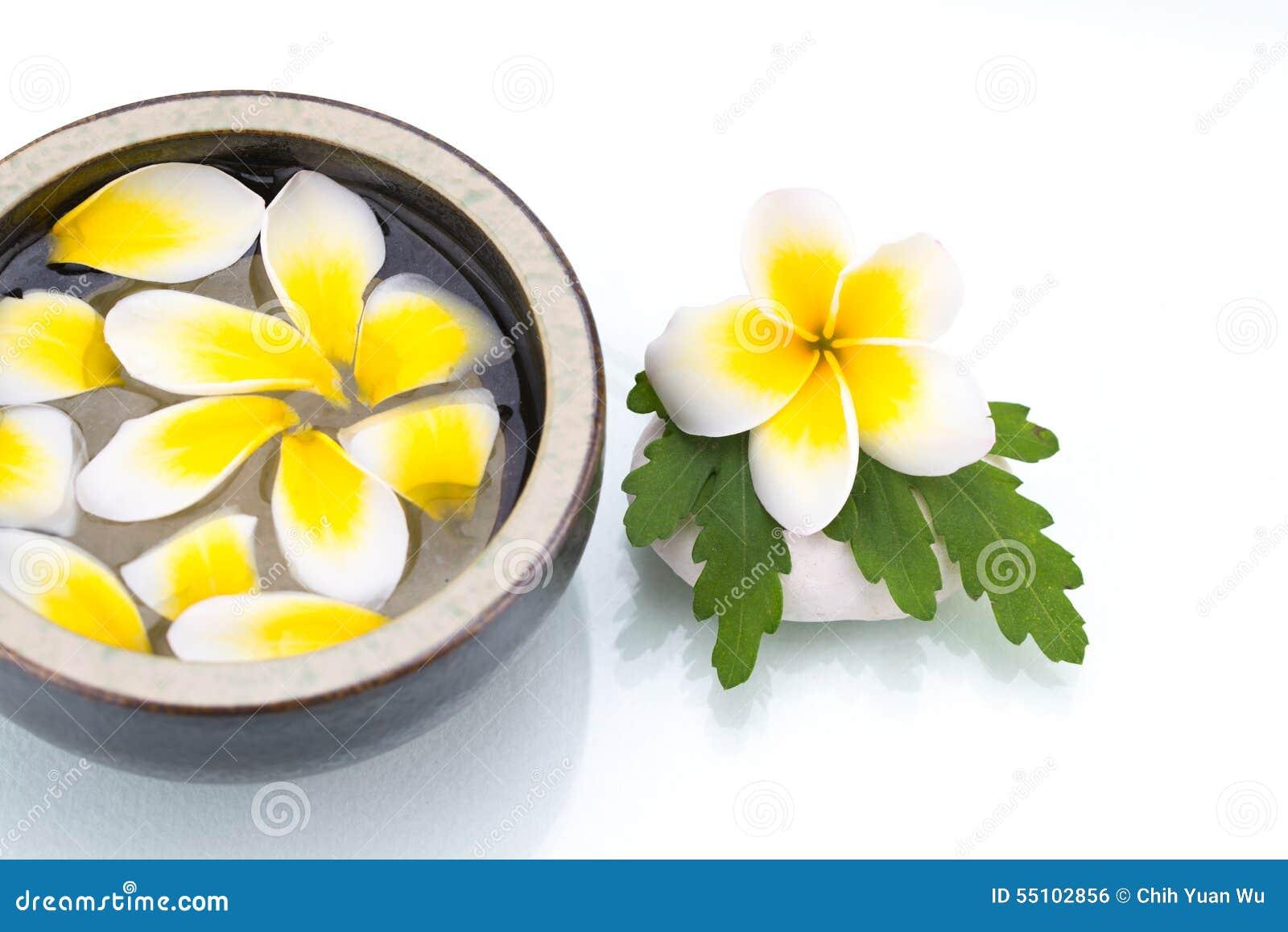 Whitblumen-Blumenblatttropfen auf Wasser der Porzellanschüssel, grünes Blatt auf sto