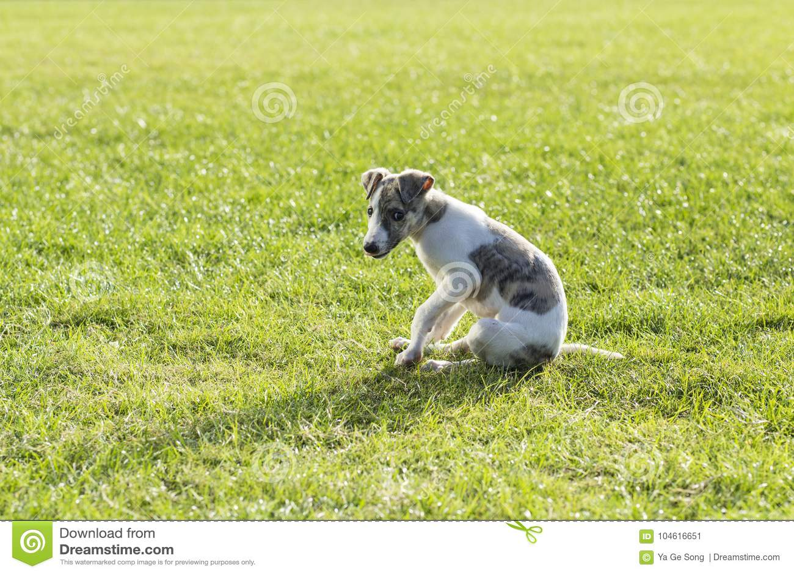Whitby hund
