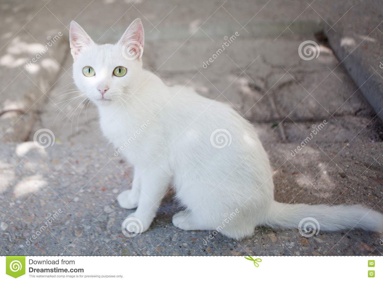 White alley cat sits on the ground