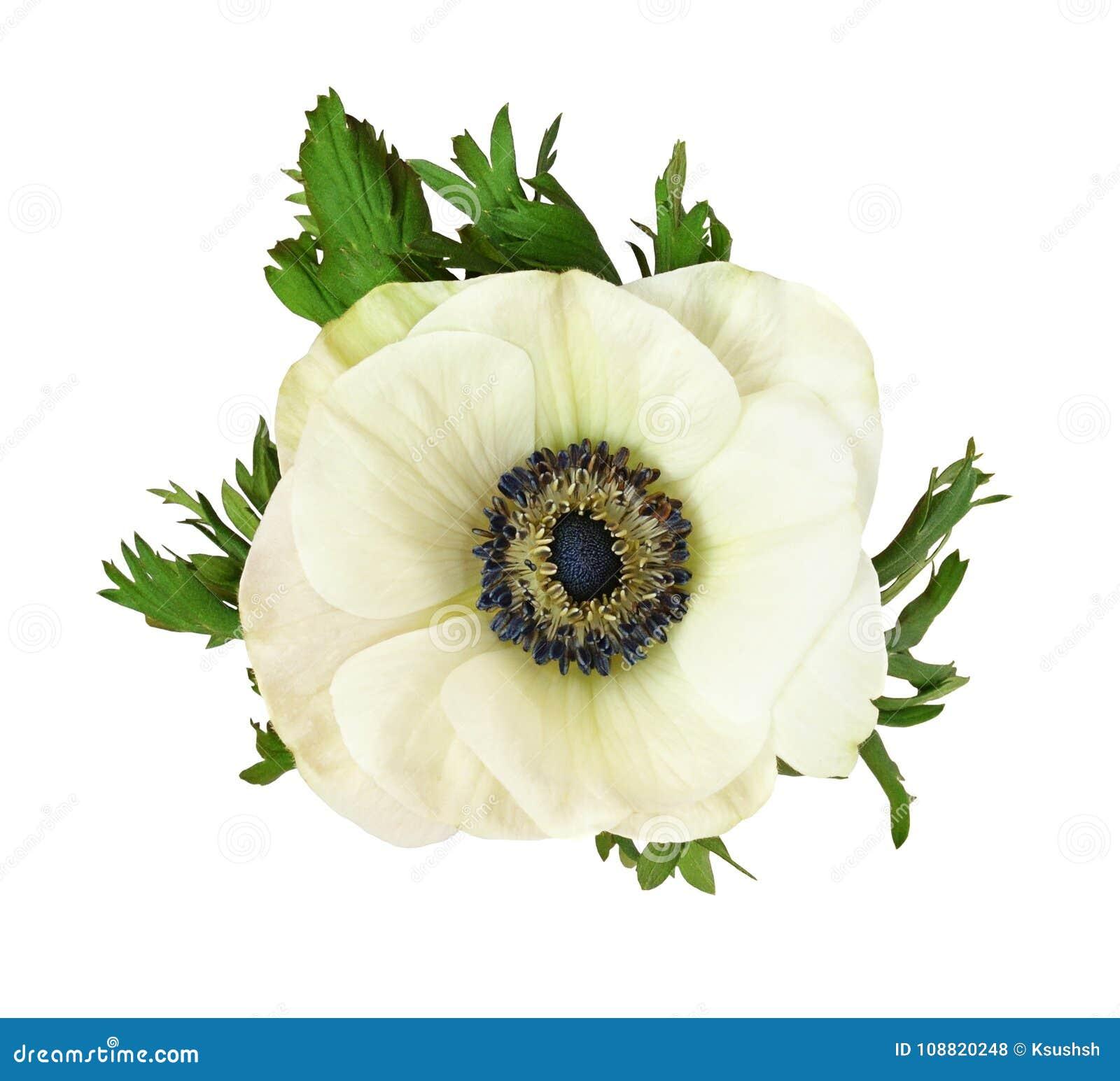 Enchanting wedding flowers meaning illustration the wedding ideas white anemone flower meaning gallery flower decoration ideas mightylinksfo