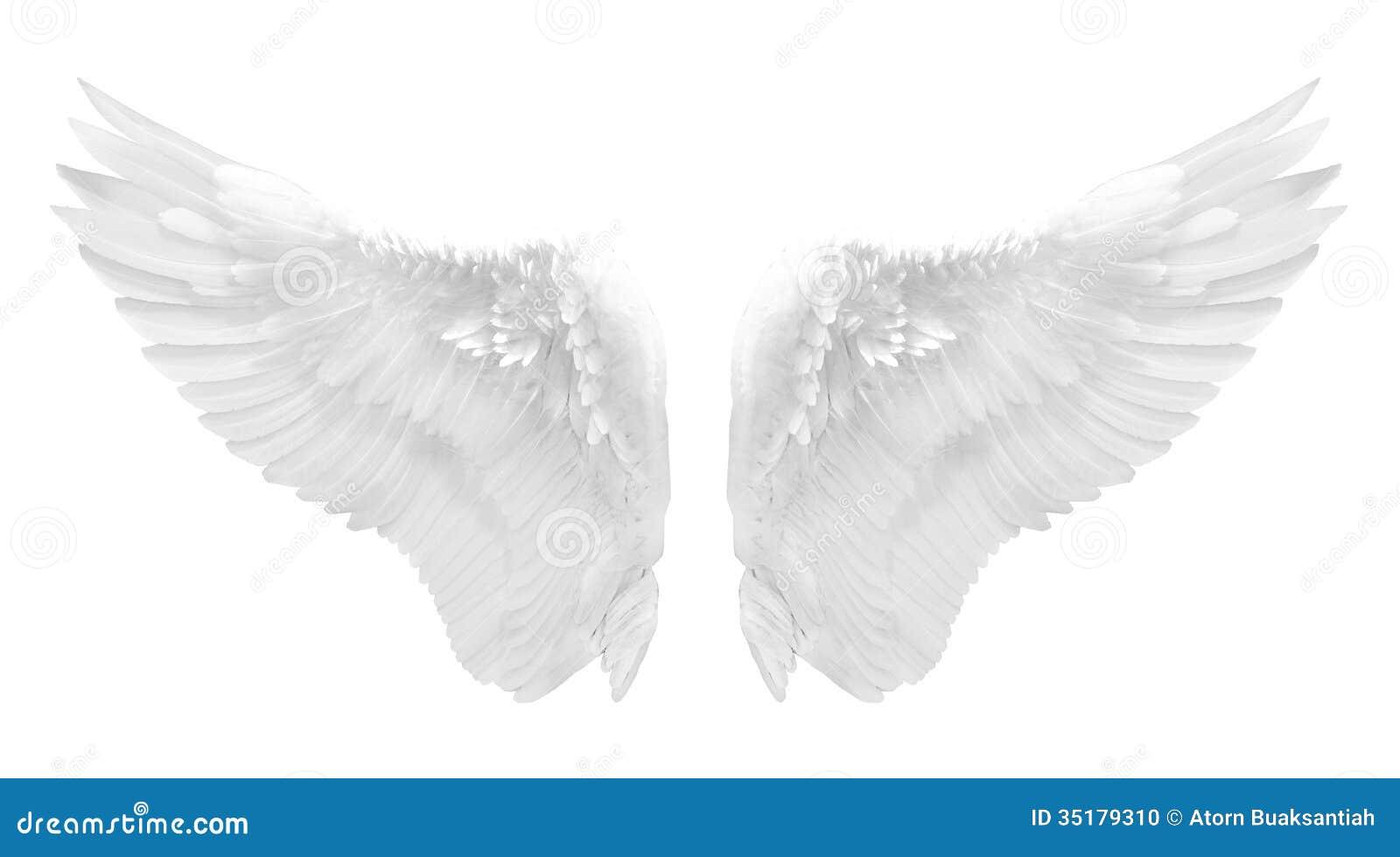 White Angel Wing Isolated Stock Photo - Image: 35179310