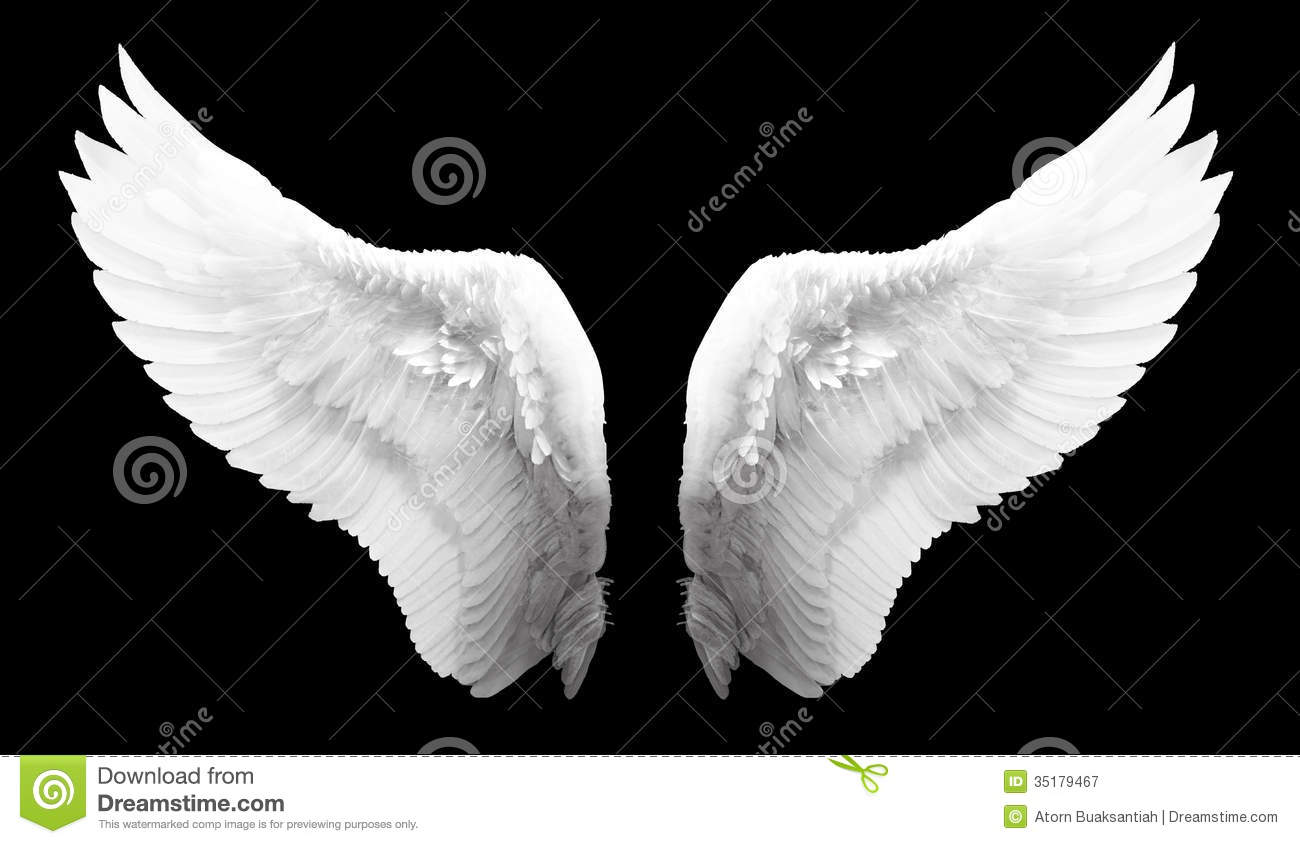 White Angel Wing Isolated Royalty Free Stock Photography - Image ...