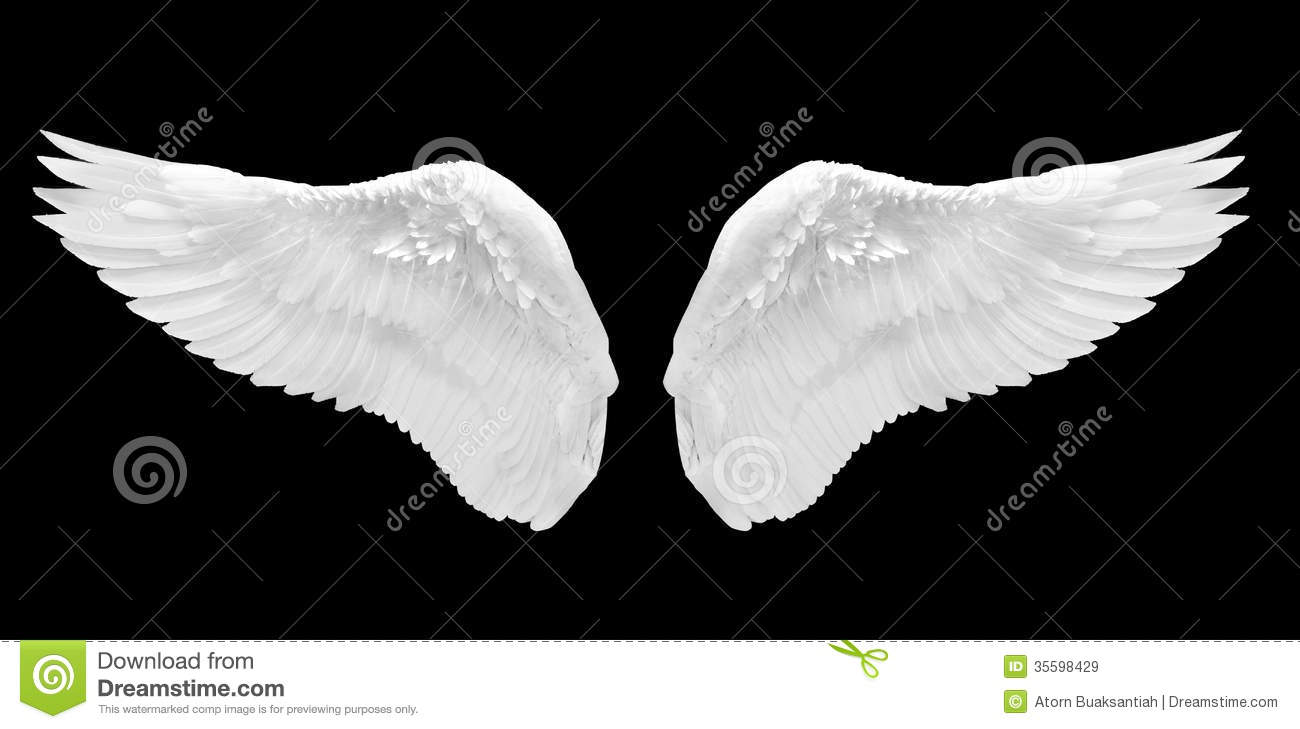 White angel wing isolated on black background