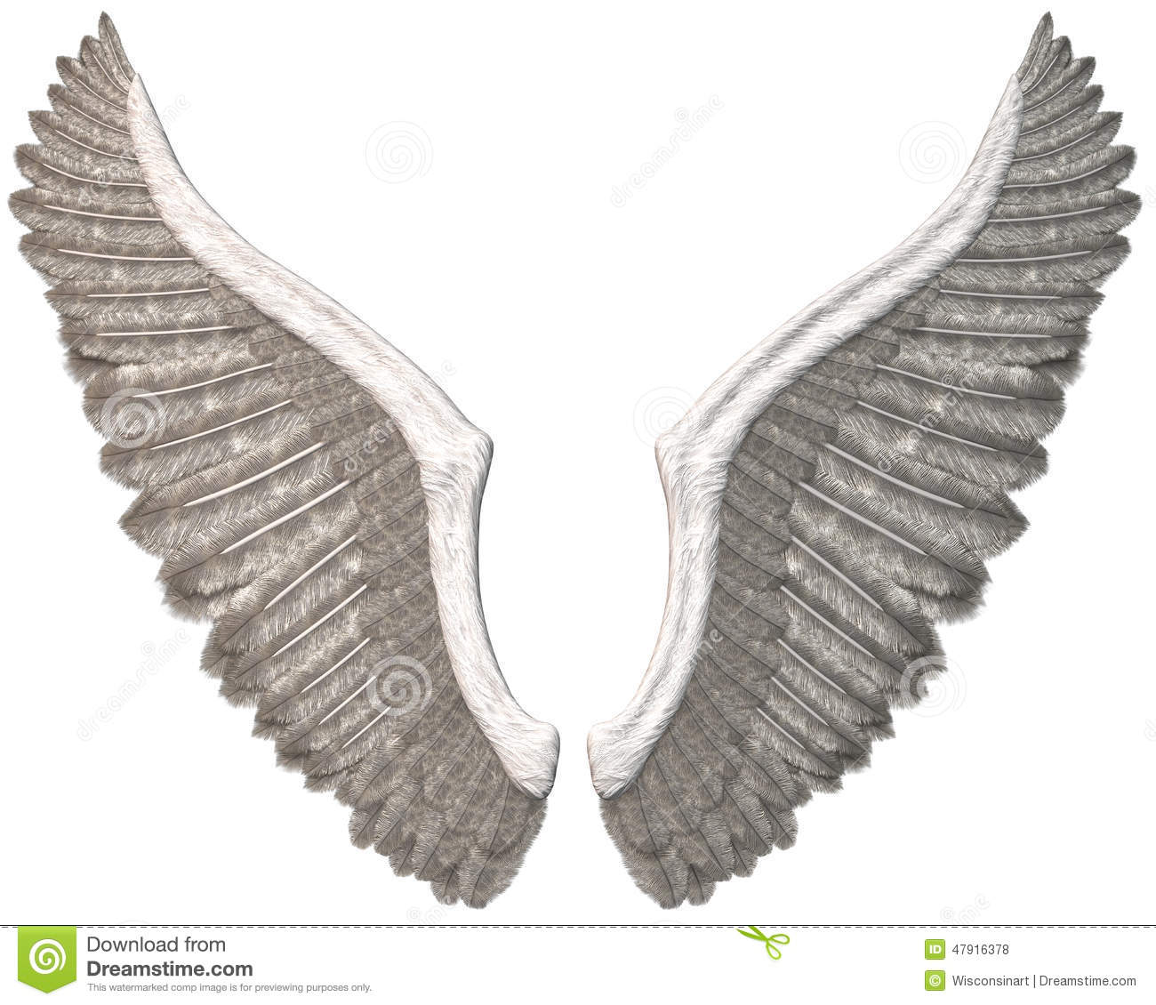 White angel wings illustration. Each wing is isolated on white. PNG ...