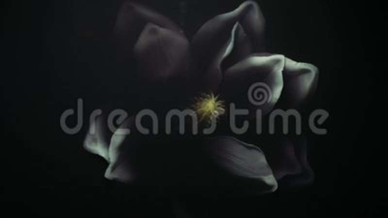 White Artificial Flower In Thick Black Water Grabs Man Hand Pulls