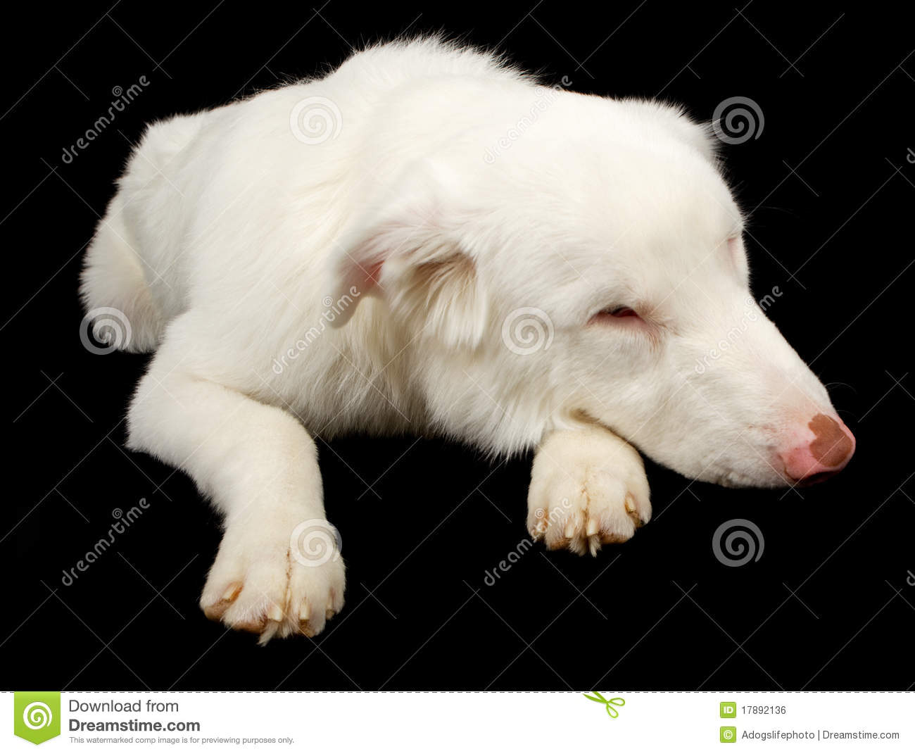 Lethal White Dog Rescue