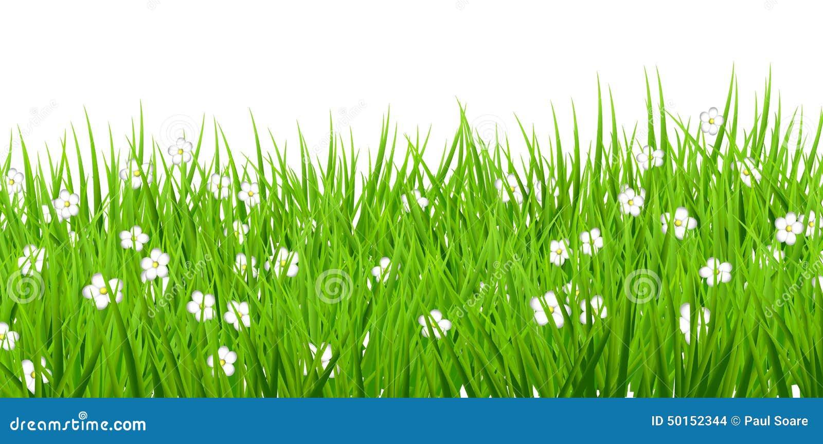 White background flowers daisies green grass