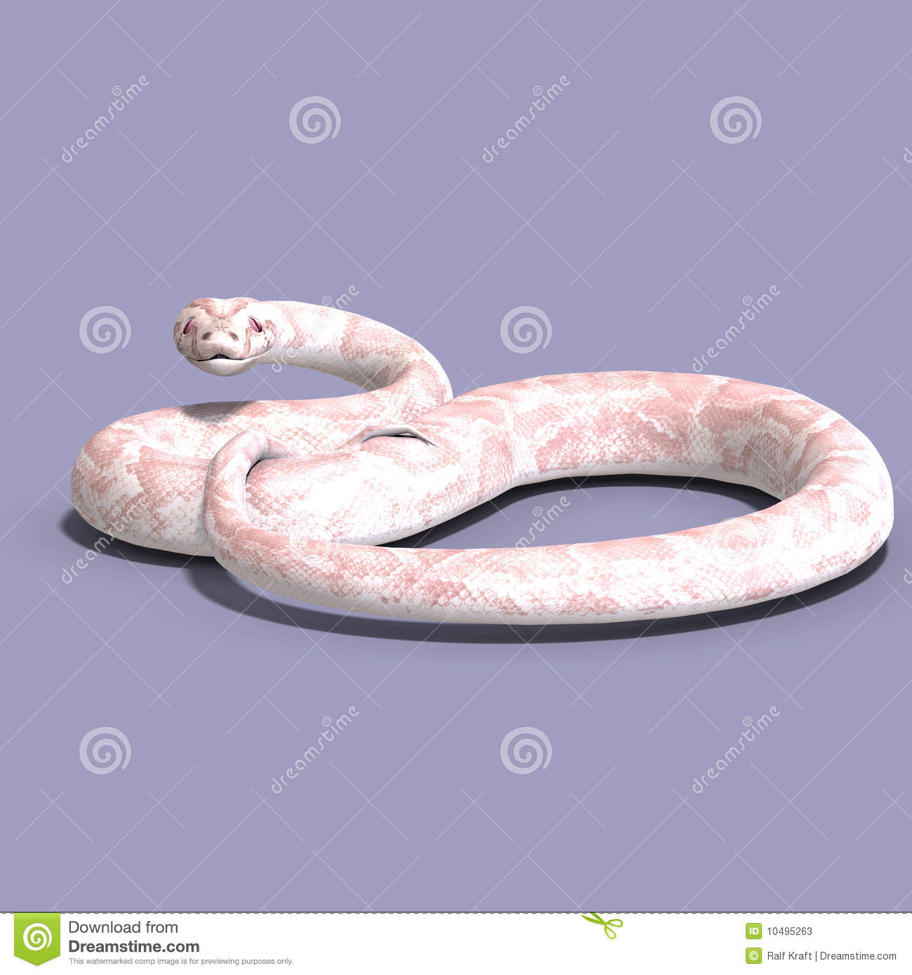 3D rendering of a white ball python with clipping path and shadow over ...