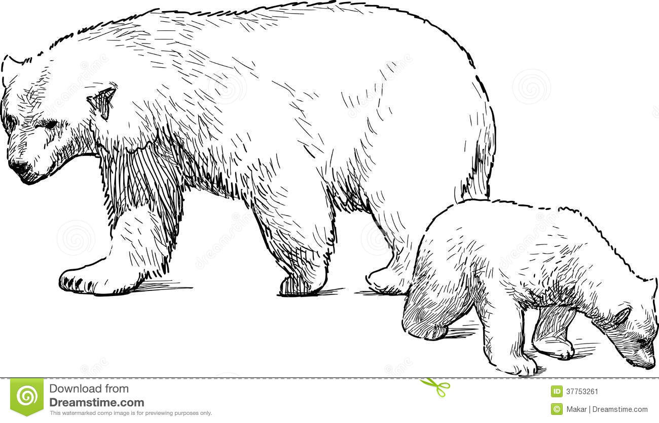 White Bear With Cub Stock Vector Illustration Of Mammal