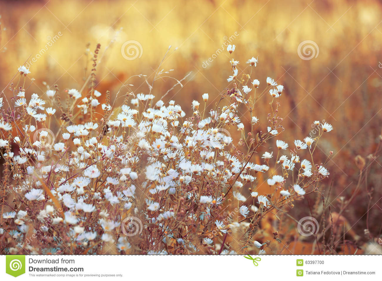 dry grass field background. Royalty-Free Stock Photo Dry Grass Field Background O