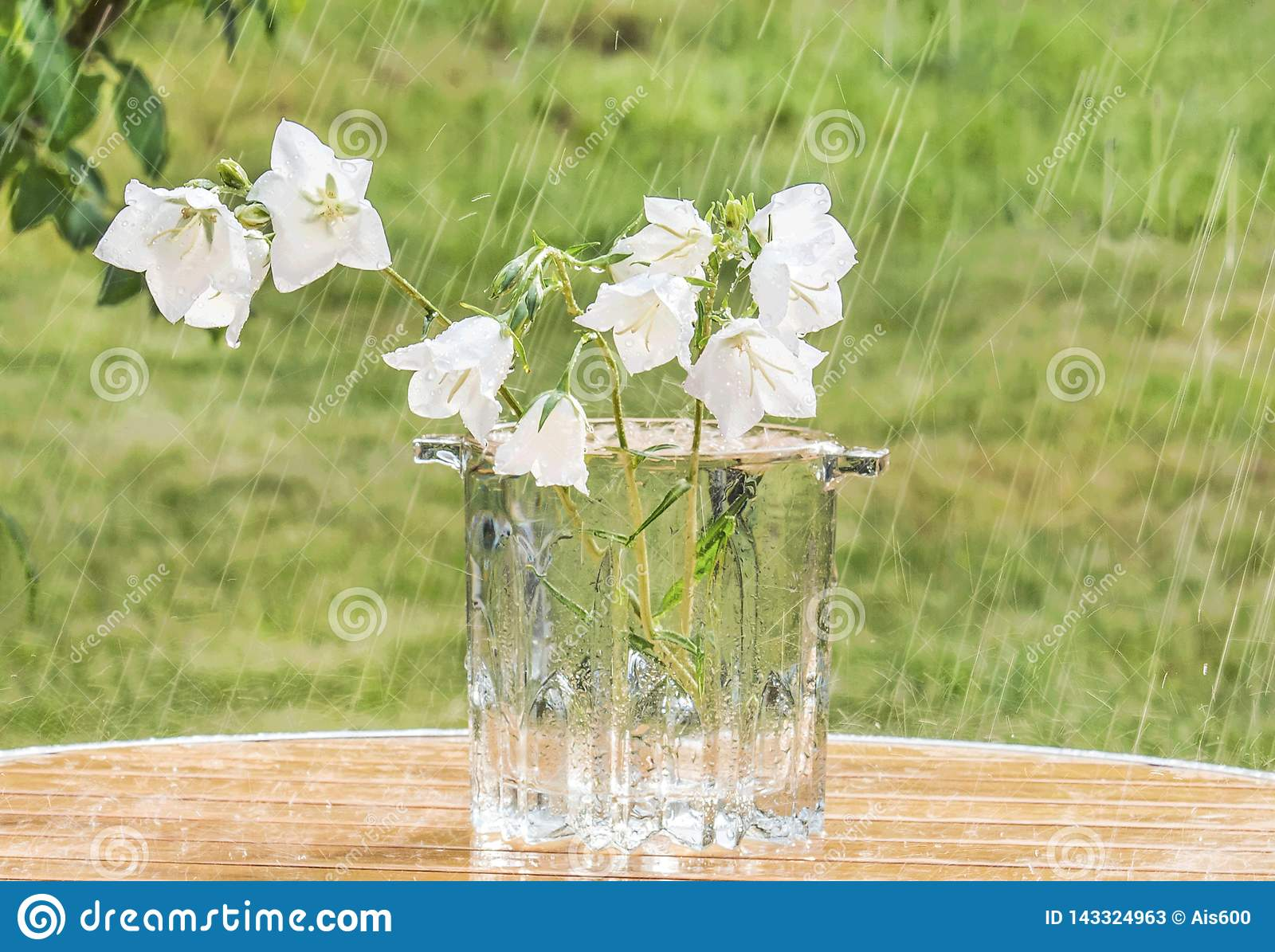 White Bells In A Vase On A Table In The Garden Under A Summer Rain Stock Image Image Of Meadow Beauty 143324963